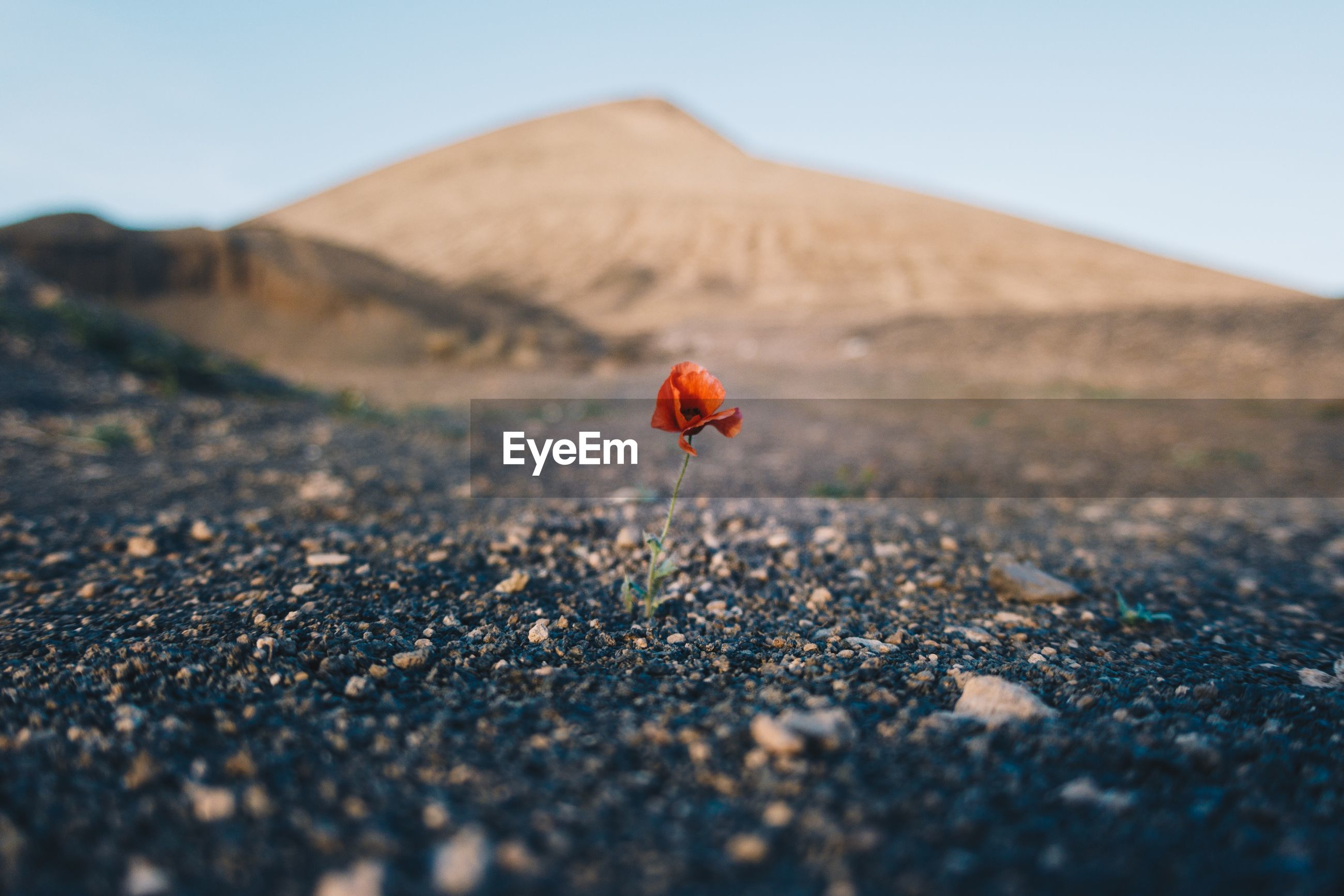 Flower blooming on land against mountains