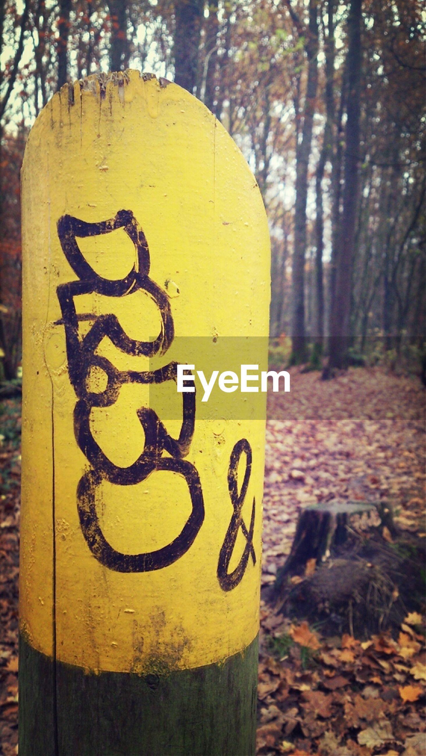 text, tree, communication, yellow, western script, close-up, tree trunk, focus on foreground, wood - material, outdoors, day, no people, capital letter, information, information sign, non-western script, sign, wooden, textured, nature