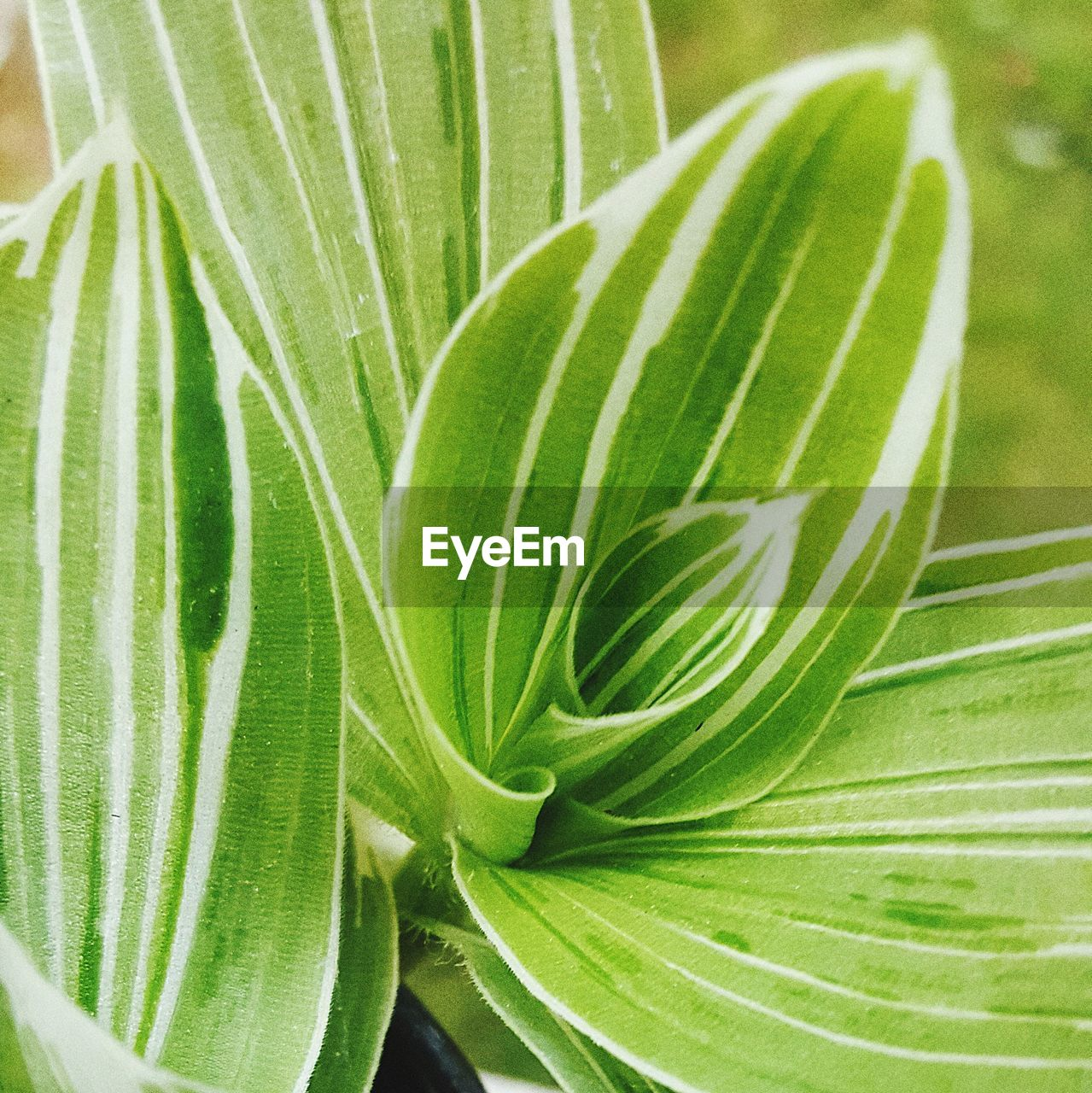 leaf, green color, plant, close-up, nature, growth, freshness, day, outdoors, no people, frond, beauty in nature, fragility