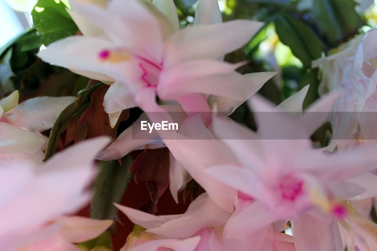 flower, selective focus, pink color, nature, beauty in nature, no people, close-up, fragility, petal, growth, freshness, plant, leaf, day, outdoors, flower head