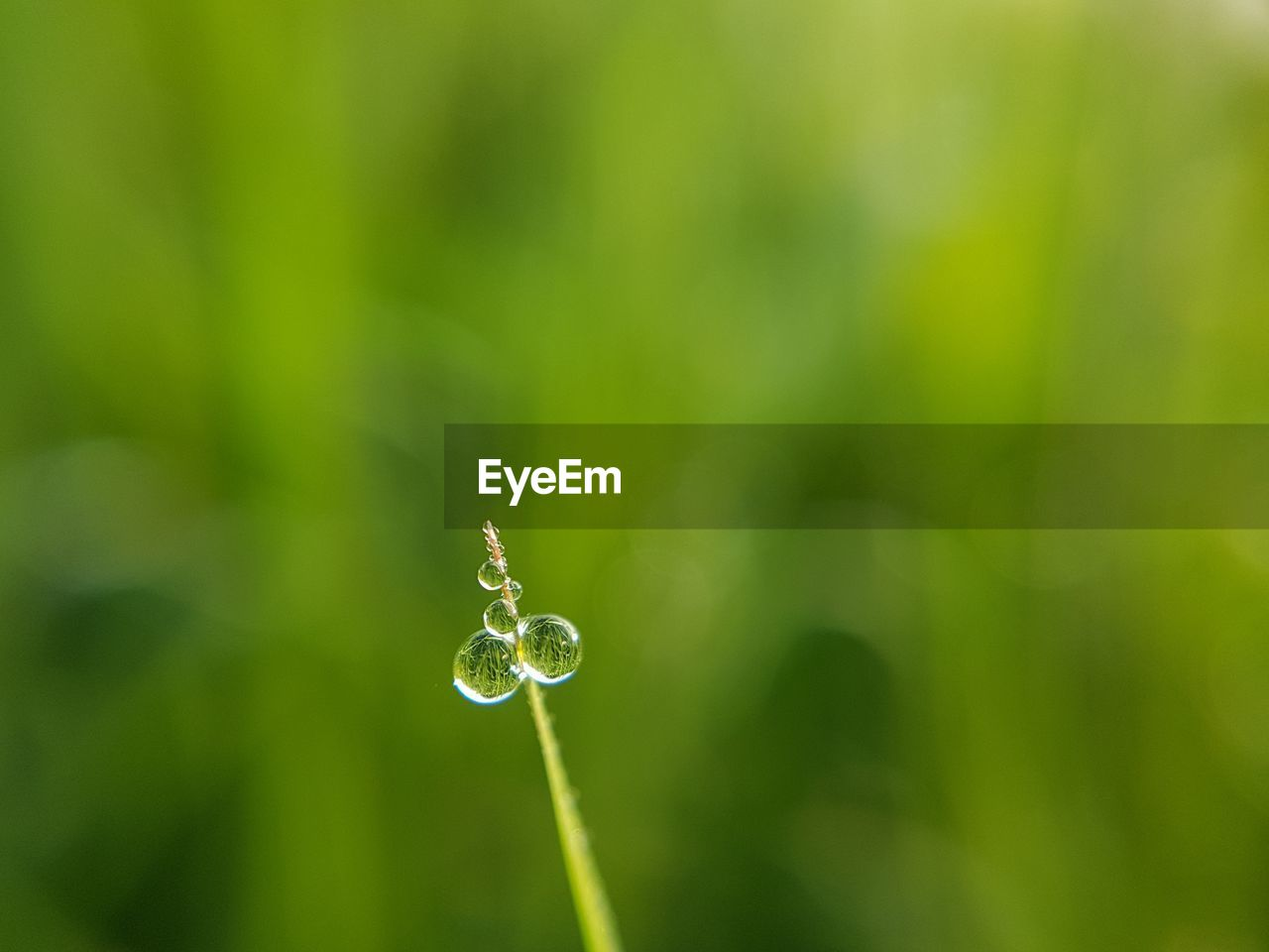 drop, plant, vulnerability, fragility, beauty in nature, green color, growth, close-up, nature, water, freshness, focus on foreground, no people, day, wet, selective focus, outdoors, dew, tranquility, purity, raindrop, blade of grass