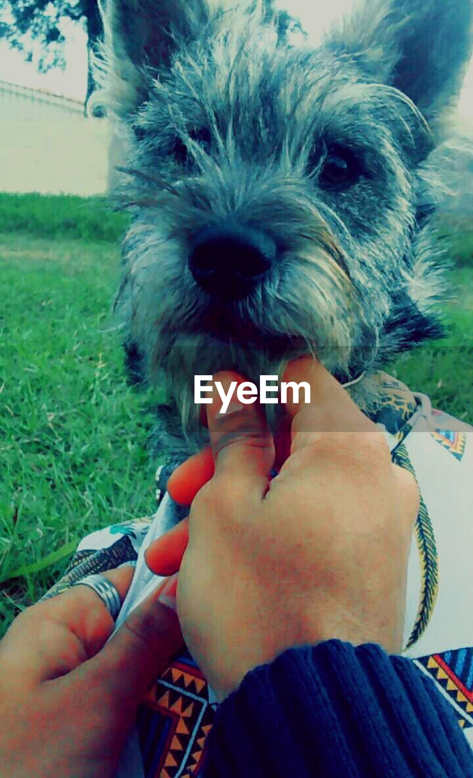 person, holding, animal themes, one animal, part of, pets, cropped, personal perspective, domestic animals, human finger, lifestyles, unrecognizable person, leisure activity, dog, mammal, close-up, pet owner