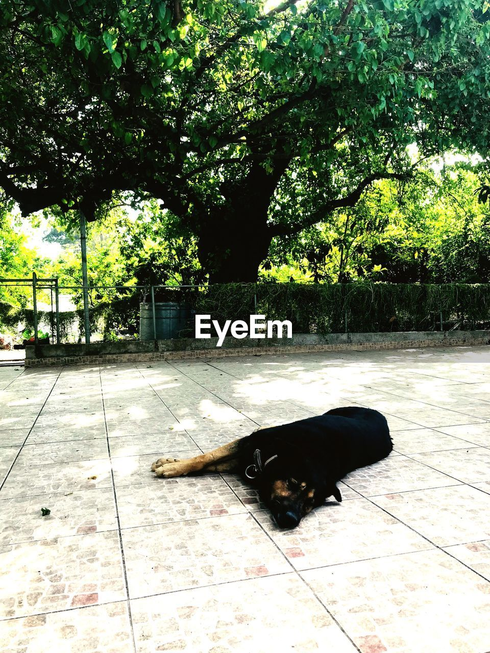 one animal, animal themes, pets, domestic, animal, domestic animals, tree, vertebrate, mammal, plant, relaxation, dog, canine, black color, lying down, no people, nature, looking at camera, resting, day, outdoors