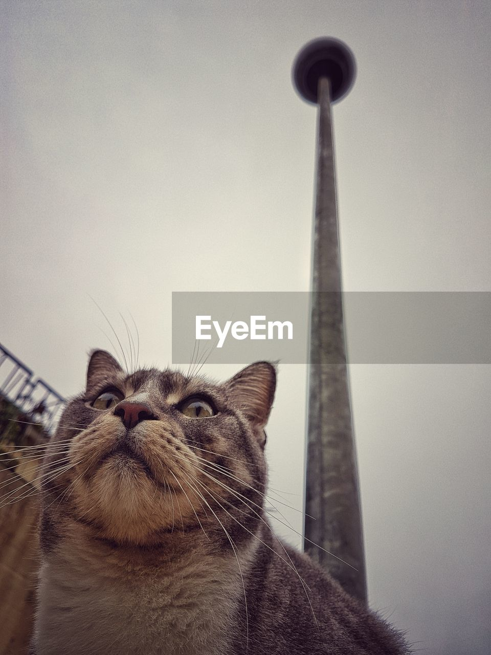 animal themes, one animal, cat, animal, domestic animals, domestic, mammal, feline, pets, domestic cat, vertebrate, low angle view, sky, architecture, no people, built structure, whisker, looking, day, close-up, animal head