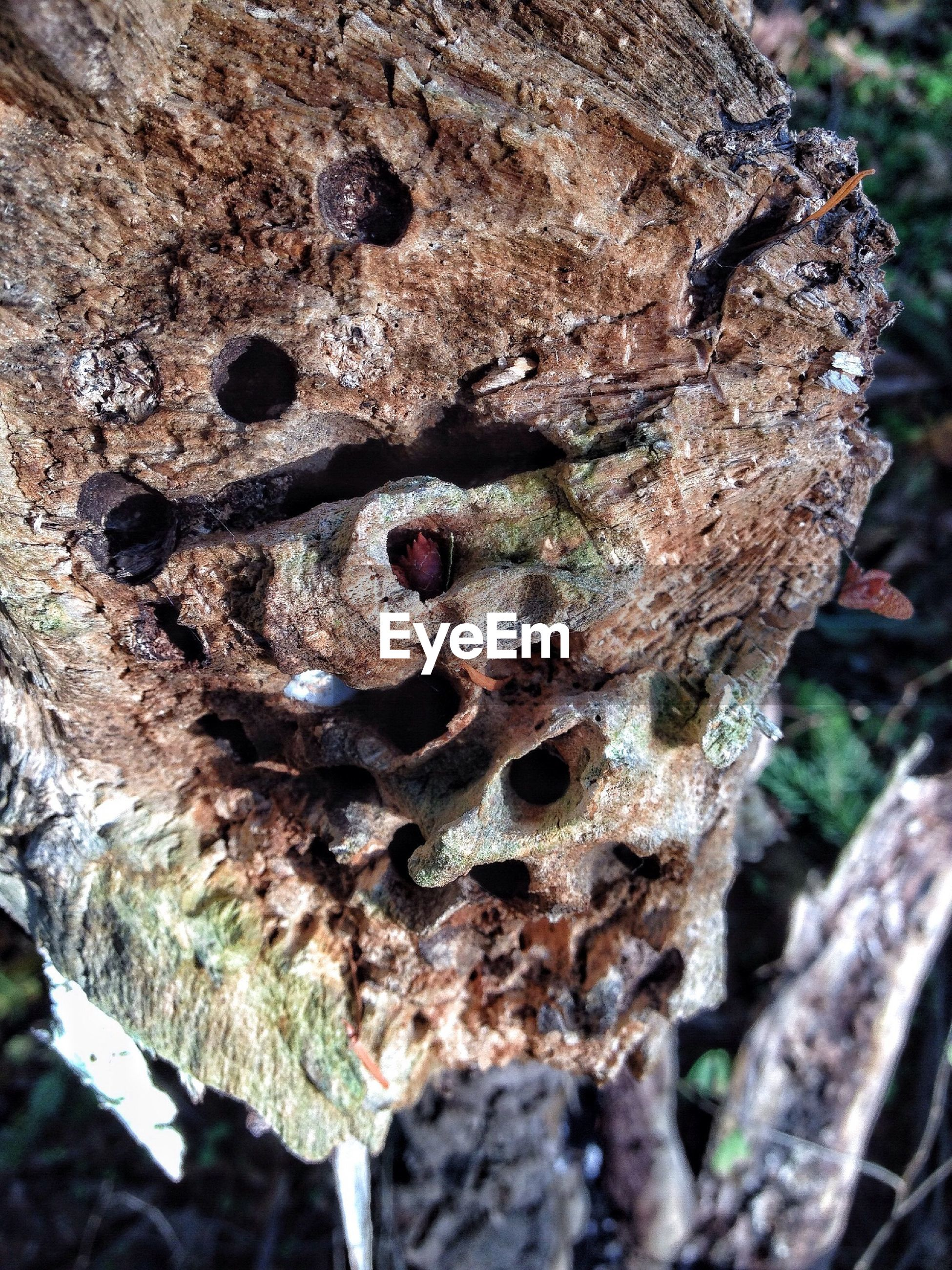 Close-up of broken tree trunk with holes