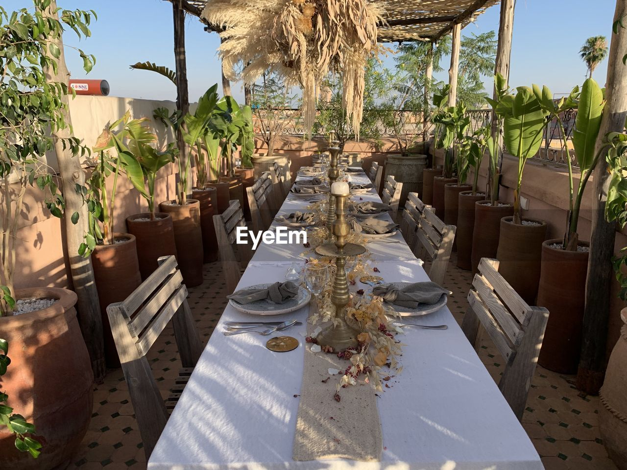 table, plant, chair, seat, nature, setting, place setting, no people, day, tablecloth, restaurant, tree, growth, sunlight, furniture, arrangement, outdoors, potted plant, absence, tropical climate
