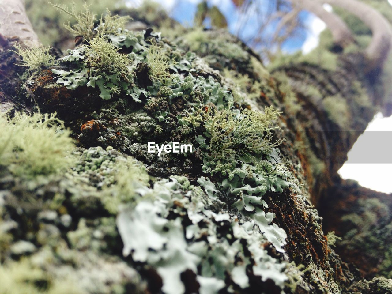 selective focus, close-up, plant, moss, growth, no people, day, nature, marijuana - herbal cannabis, green color, rock - object, focus on foreground, outdoors, rock, solid, lichen, tree, still life, cannabis plant, healthcare and medicine