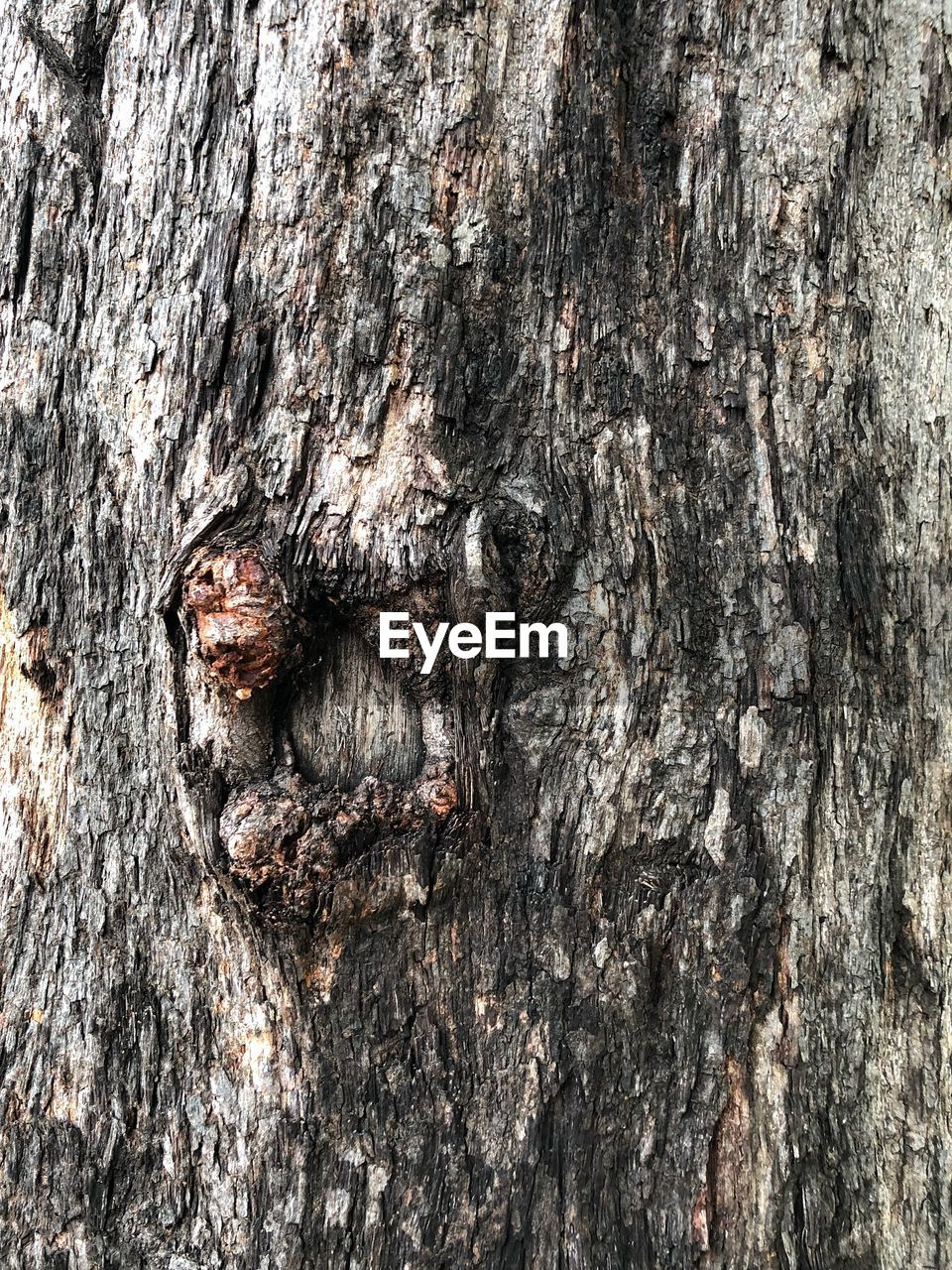 textured, tree trunk, trunk, tree, close-up, rough, backgrounds, full frame, wood - material, no people, plant, day, nature, natural pattern, outdoors, pattern, focus on foreground, plant bark, weathered, animals in the wild, bark