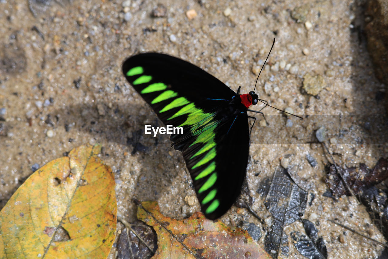 one animal, animal themes, animals in the wild, animal, insect, animal wildlife, invertebrate, solid, day, black color, nature, no people, rock, animal wing, rock - object, close-up, outdoors, focus on foreground, zoology, high angle view, butterfly - insect, butterfly, marine