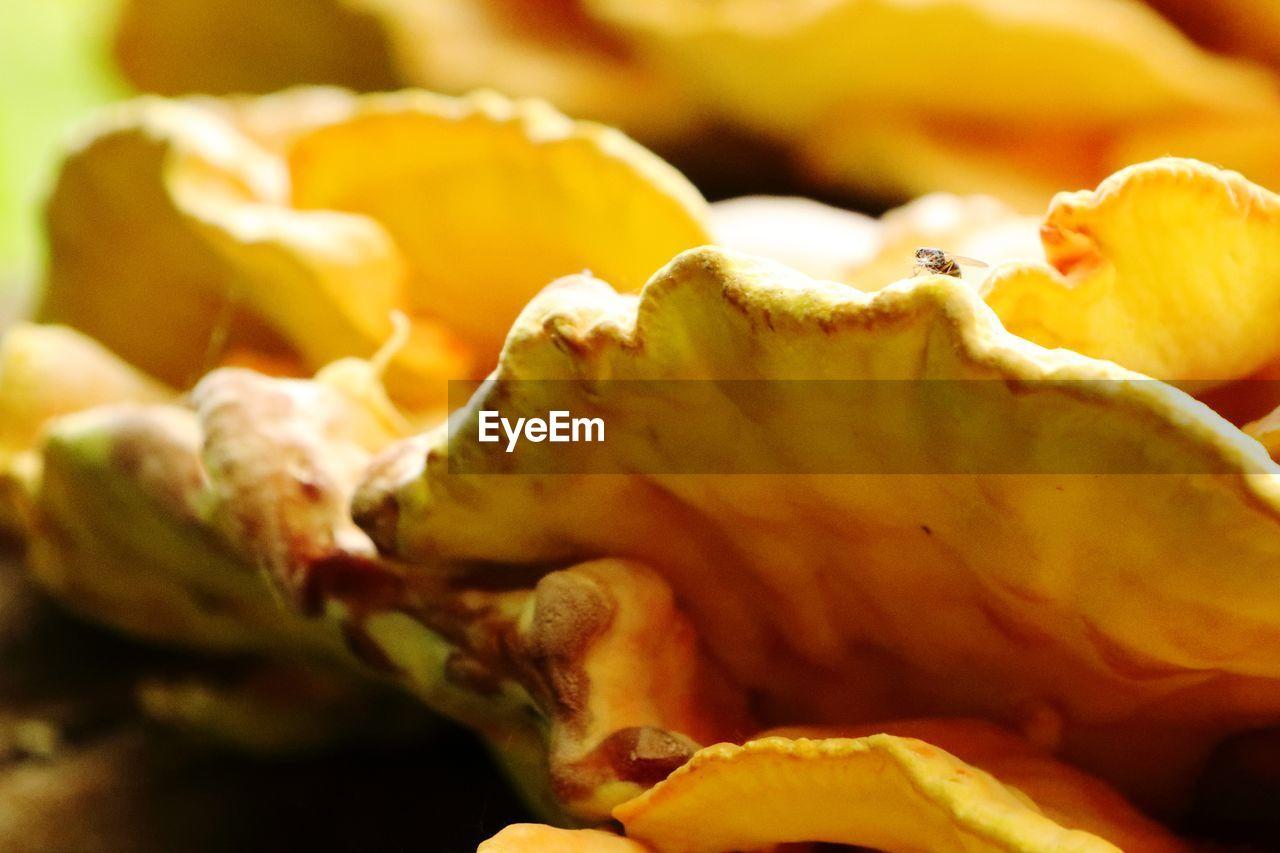 Full frame shot of mushroom