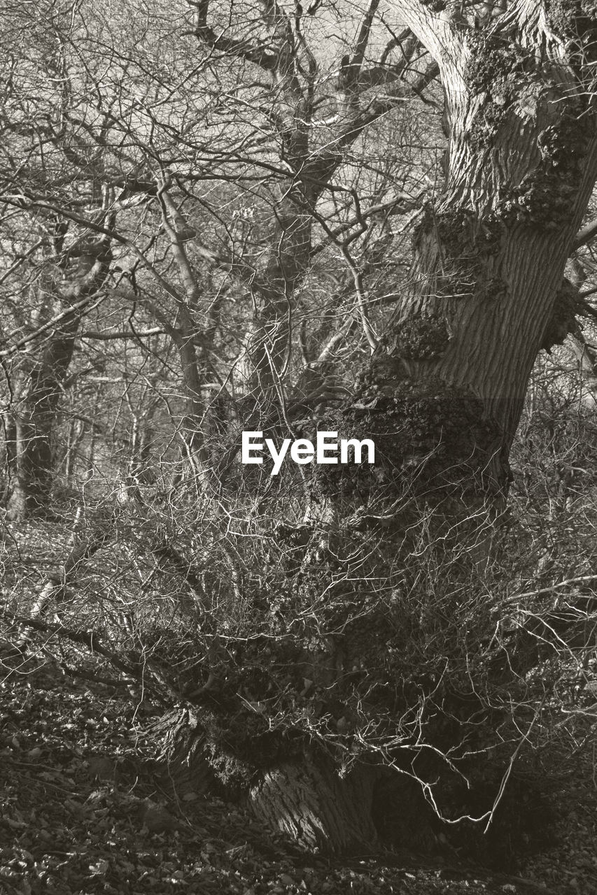 tree, nature, branch, bare tree, no people, forest, beauty in nature, outdoors, water, day