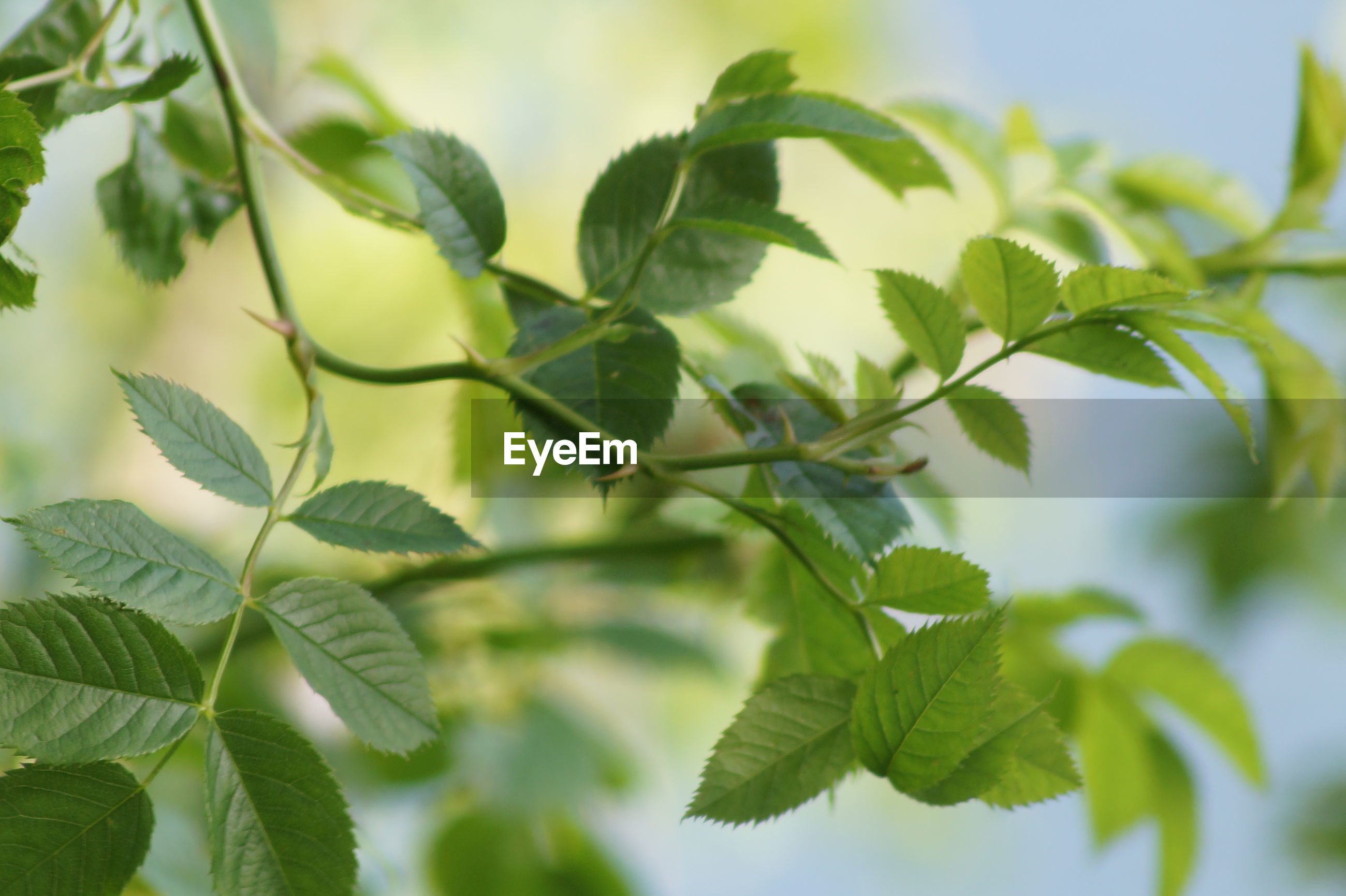 leaf, green color, growth, plant, nature, no people, outdoors, beauty in nature, day, freshness, close-up, fragility, tree