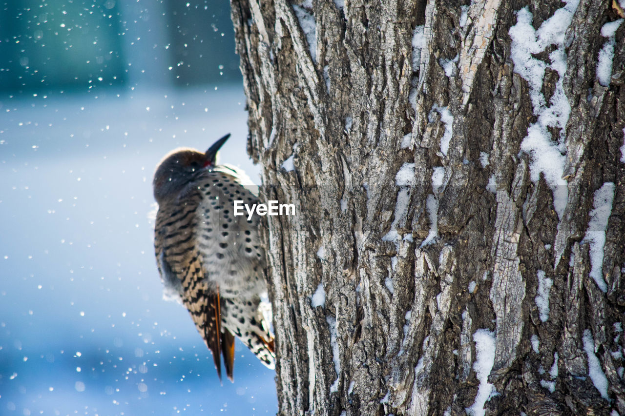 Bird Perching On Tree Against Sky During Winter