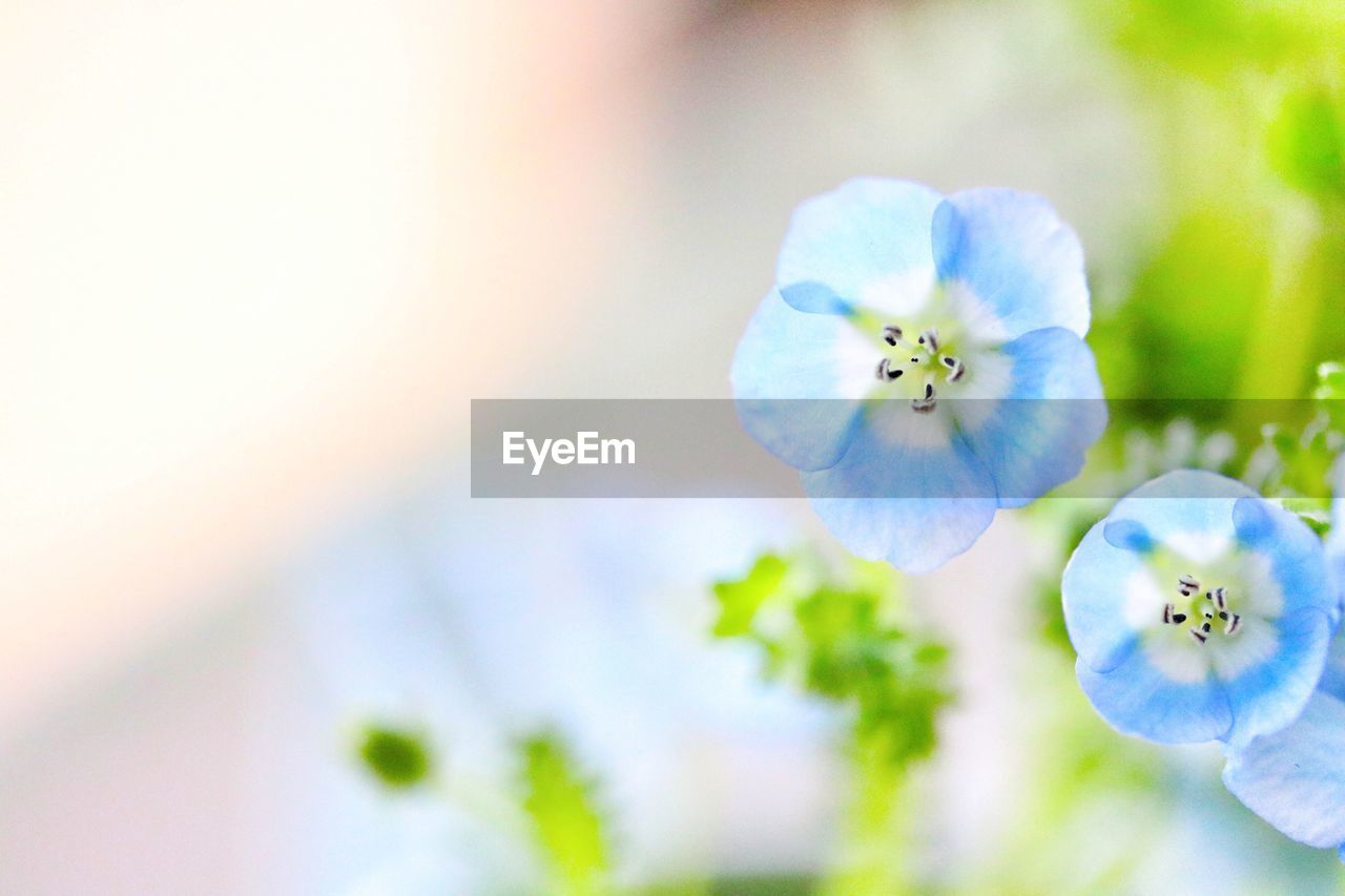 flower, beauty in nature, fragility, nature, freshness, growth, flower head, petal, plant, no people, focus on foreground, close-up, day, tranquility, outdoors, blooming
