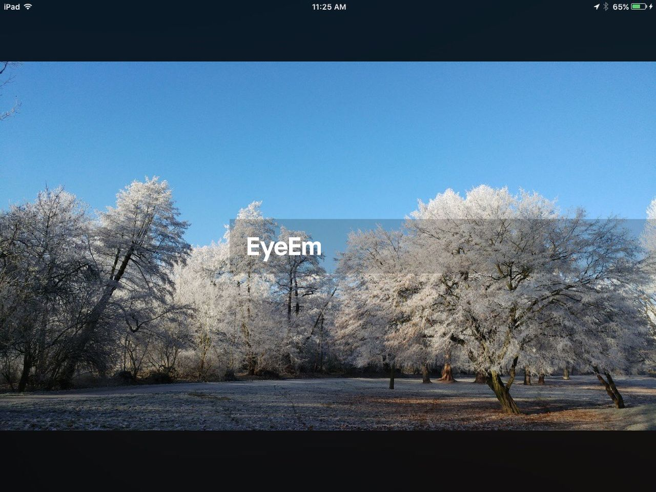 tree, nature, beauty in nature, flower, tranquility, clear sky, tranquil scene, branch, no people, growth, day, outdoors, scenics, snow, winter, landscape, freshness, sky