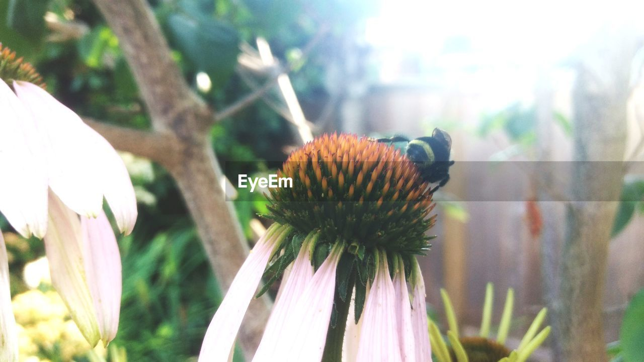 plant, growth, flower, vulnerability, beauty in nature, flowering plant, fragility, close-up, freshness, focus on foreground, nature, no people, flower head, petal, inflorescence, day, outdoors, selective focus, plant stem, coneflower, sepal