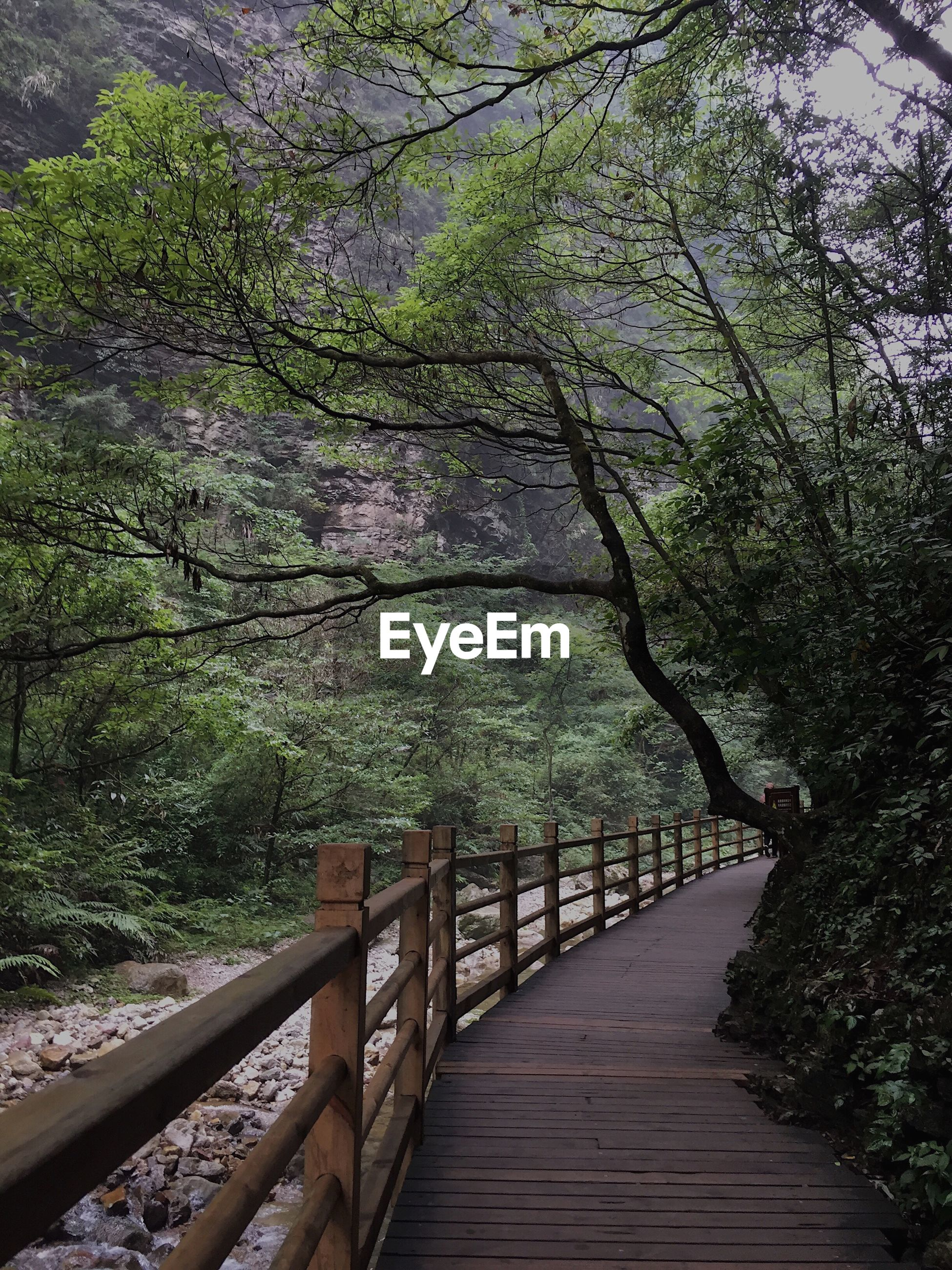 View of footbridge by trees in forest