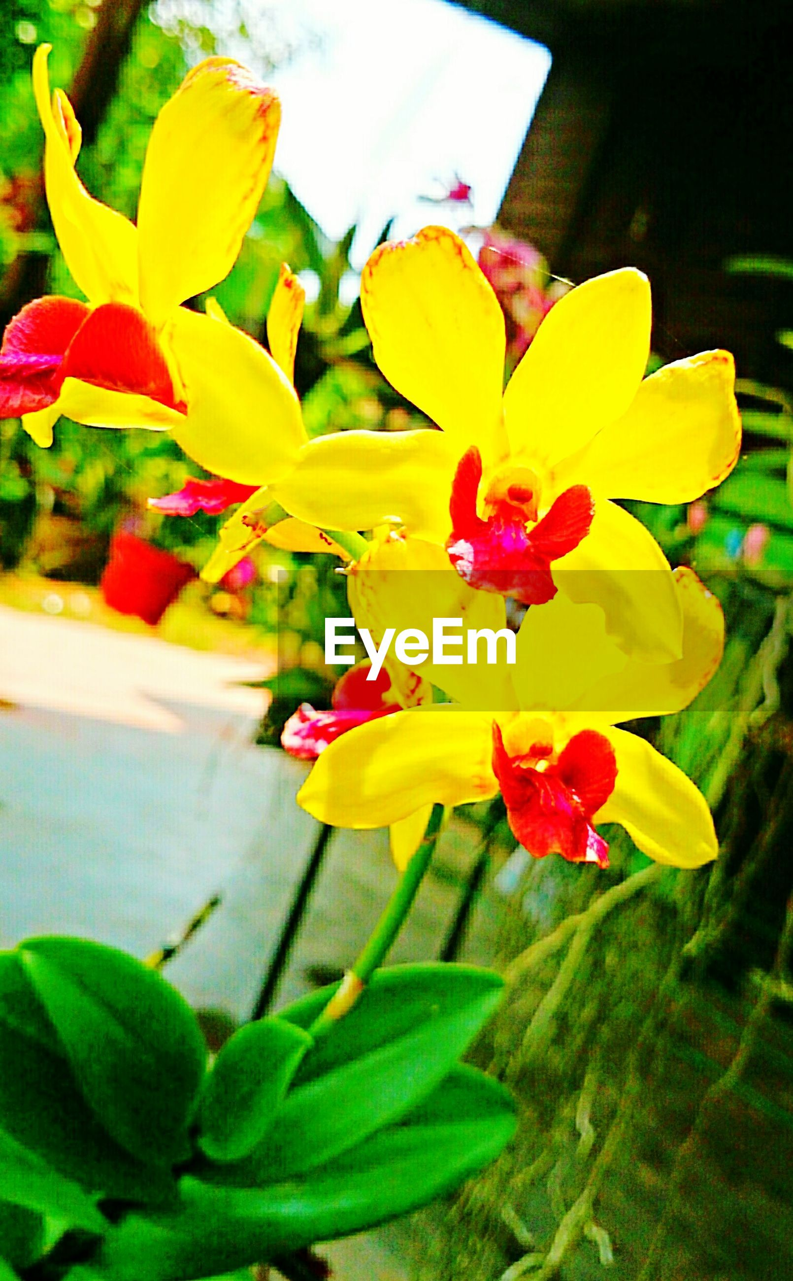 Yellow and red orchids blooming outdoors