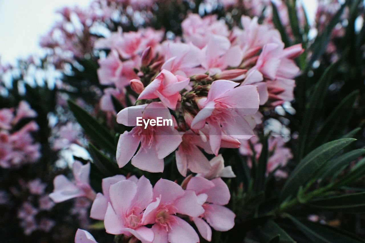 flower, fragility, beauty in nature, nature, petal, growth, pink color, no people, freshness, close-up, plant, tree, day, outdoors, blooming, flower head