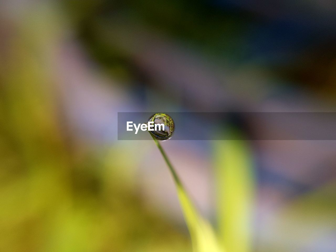close-up, beauty in nature, plant, growth, vulnerability, selective focus, fragility, focus on foreground, day, nature, no people, animal themes, animal, animals in the wild, flower, animal wildlife, green color, one animal, invertebrate, water, outdoors, purity, blade of grass