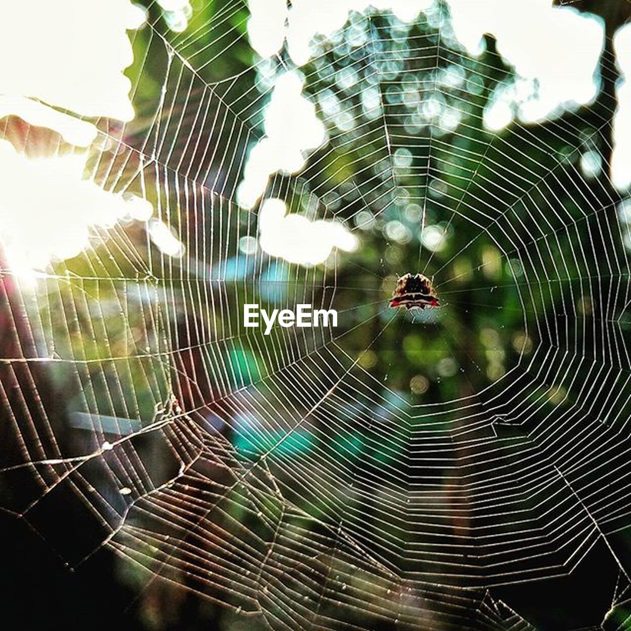 spider web, spider, web, spinning, one animal, animal themes, nature, outdoors, fragility, animals in the wild, focus on foreground, close-up, trapped, no people, insect, day, beauty in nature, animal wildlife