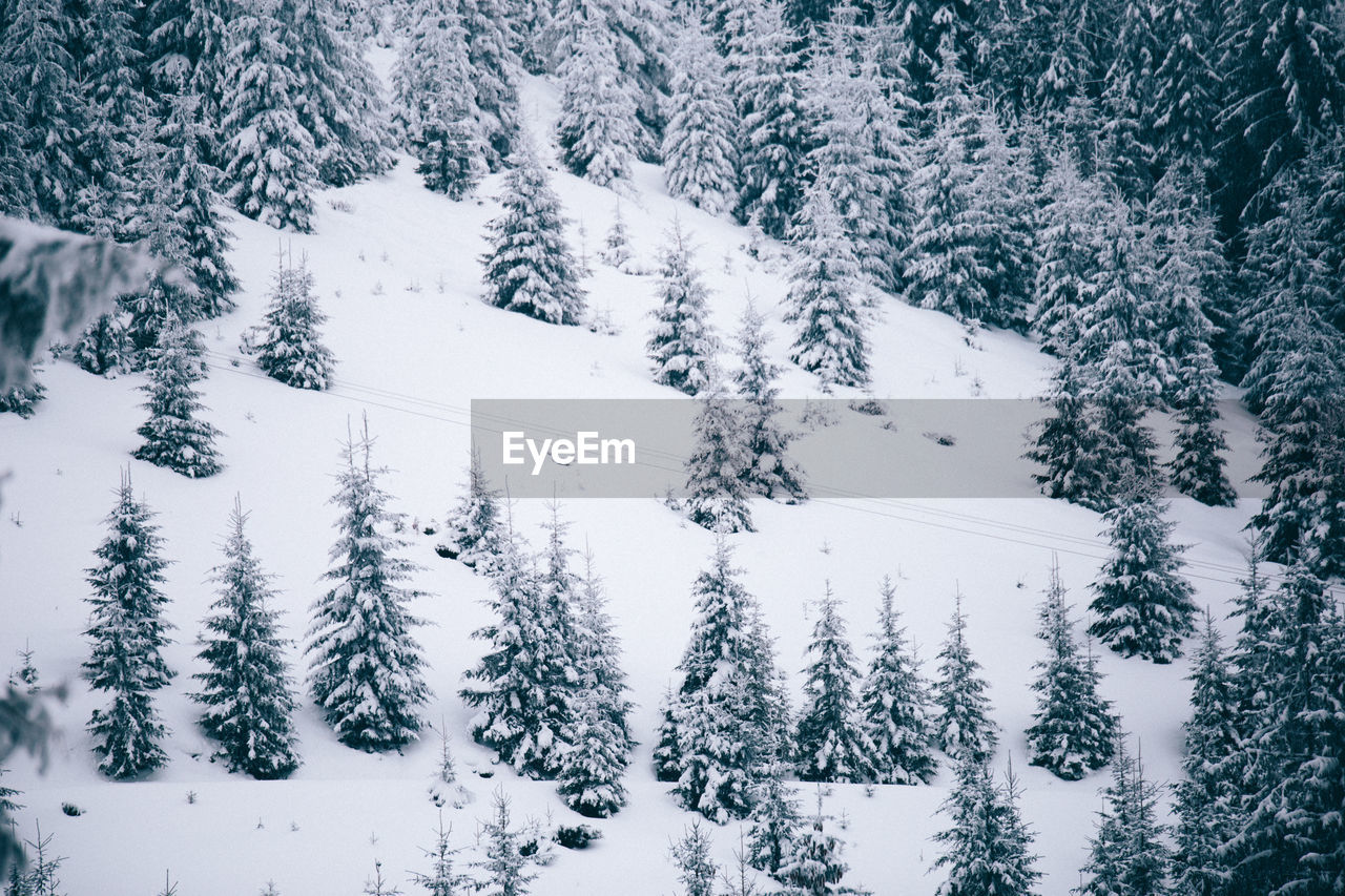 winter, snow, cold temperature, nature, white color, weather, tree, beauty in nature, tranquil scene, tranquility, no people, pine tree, outdoors, day, scenics, landscape, forest, mountain, wilderness area, spruce tree