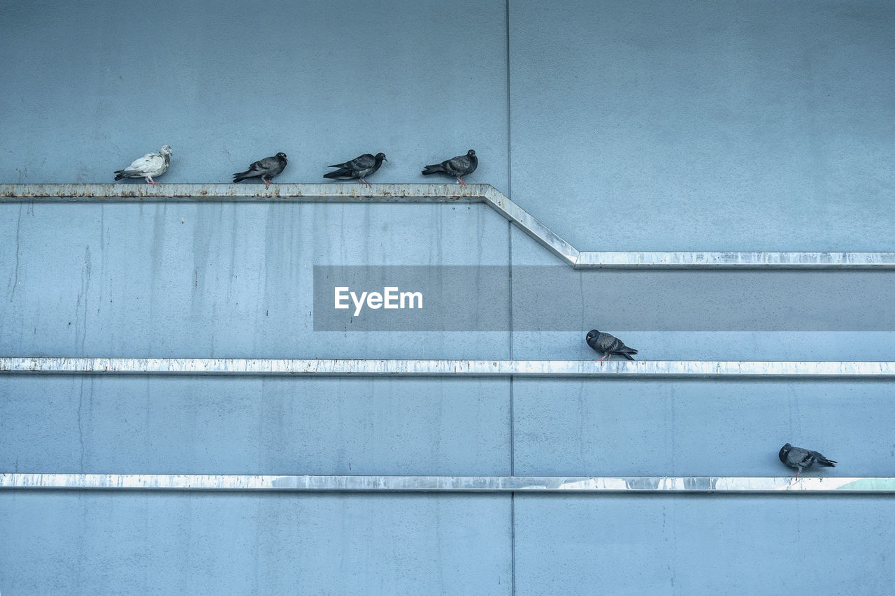 animal themes, animal, animal wildlife, group of animals, bird, vertebrate, animals in the wild, day, no people, architecture, perching, wall - building feature, built structure, medium group of animals, pigeon, outdoors, building exterior, blue, railing, animal family