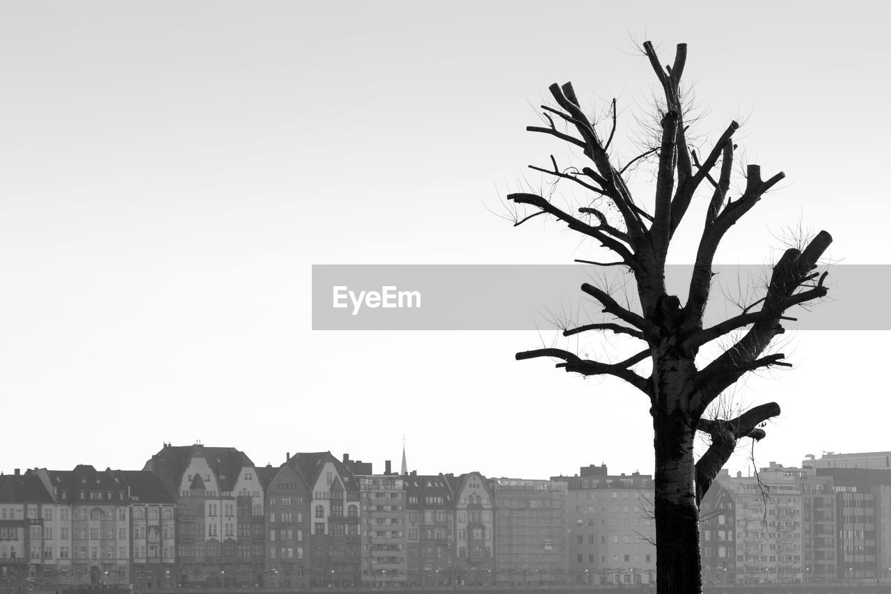 Bare Tree Against Buildings