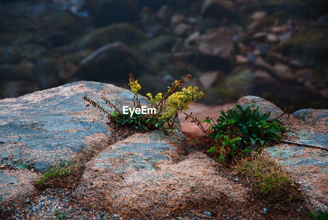 Mother nature  rock garden
