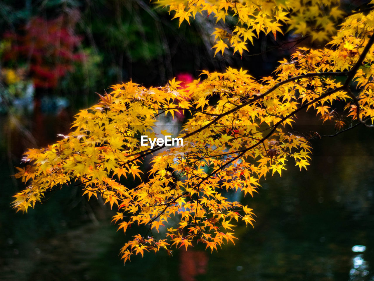 nature, beauty in nature, tree, autumn, leaf, no people, one animal, growth, animal themes, change, outdoors, flower, animals in the wild, day, branch, close-up, fragility, water, freshness