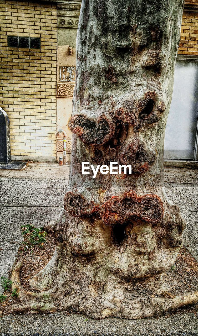 built structure, architecture, building exterior, art and craft, sculpture, tree trunk, day, weathered, statue, religion, outdoors, close-up, no people, spirituality, water, nature