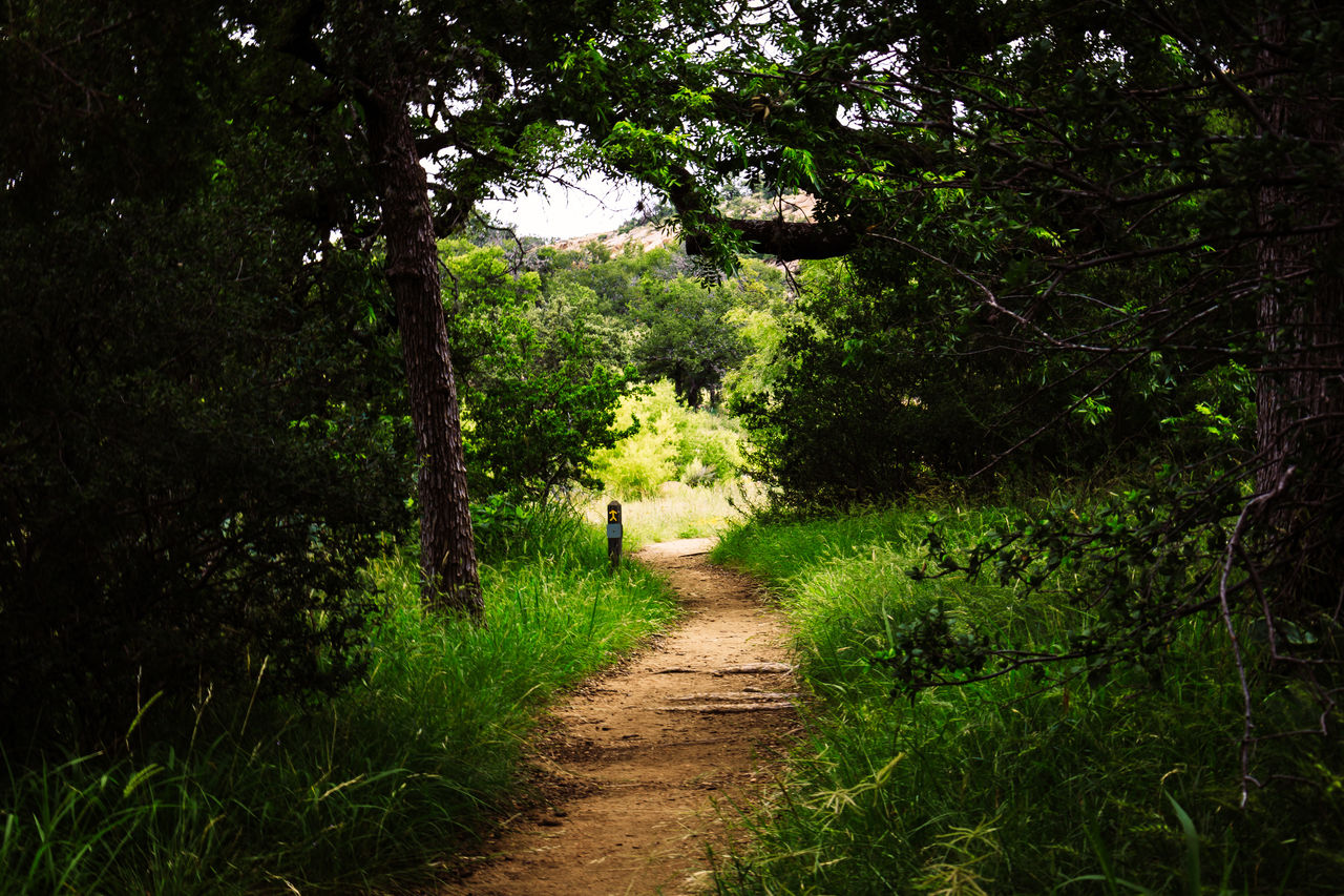 plant, tree, direction, the way forward, growth, land, nature, green color, footpath, forest, tranquility, beauty in nature, no people, foliage, lush foliage, grass, day, tranquil scene, scenics - nature, non-urban scene, outdoors, woodland, trail