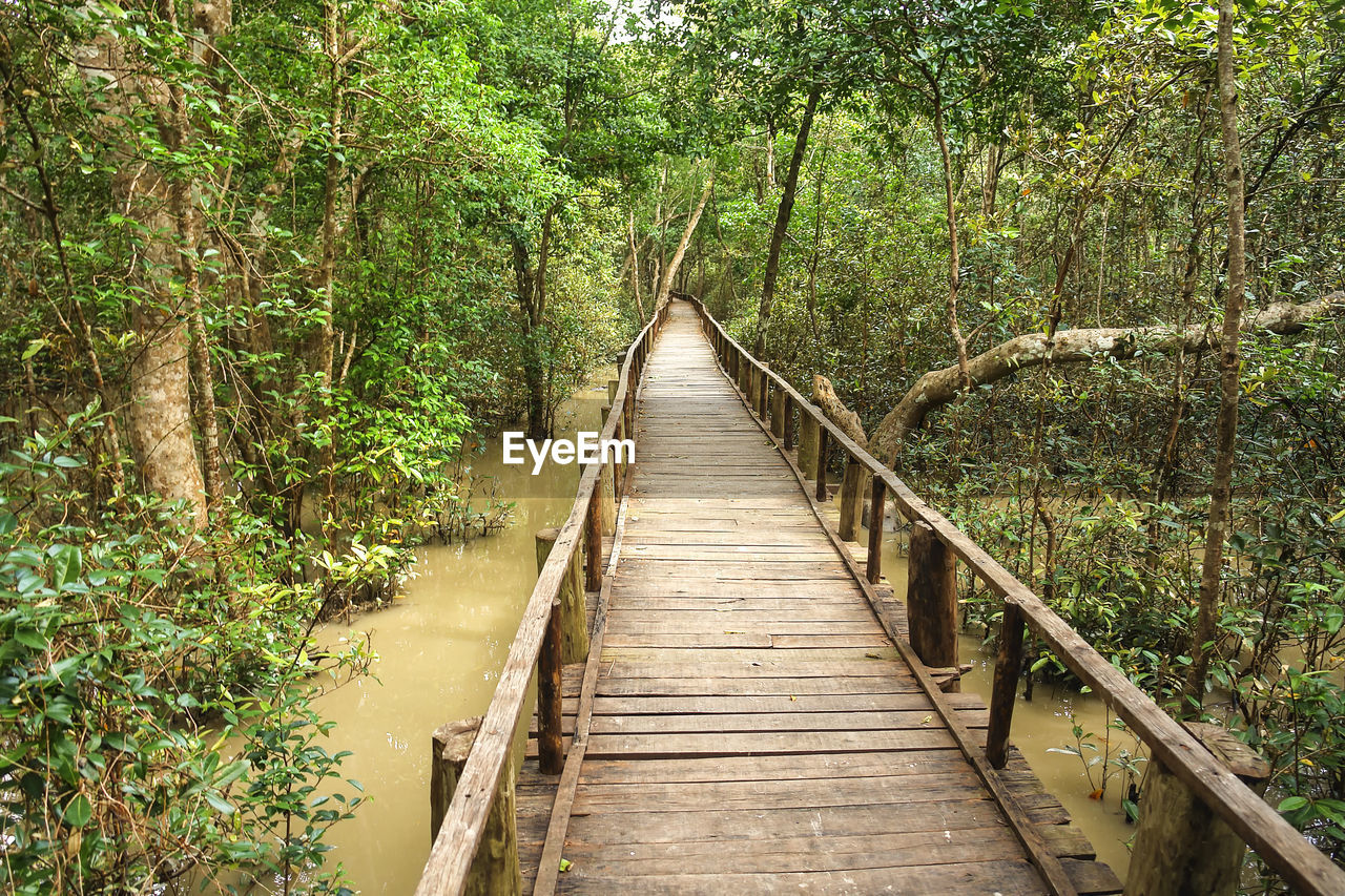tree, plant, forest, the way forward, direction, tranquility, bridge, land, nature, wood - material, connection, beauty in nature, no people, tranquil scene, day, growth, footbridge, bridge - man made structure, green color, outdoors, diminishing perspective, wood, woodland, long
