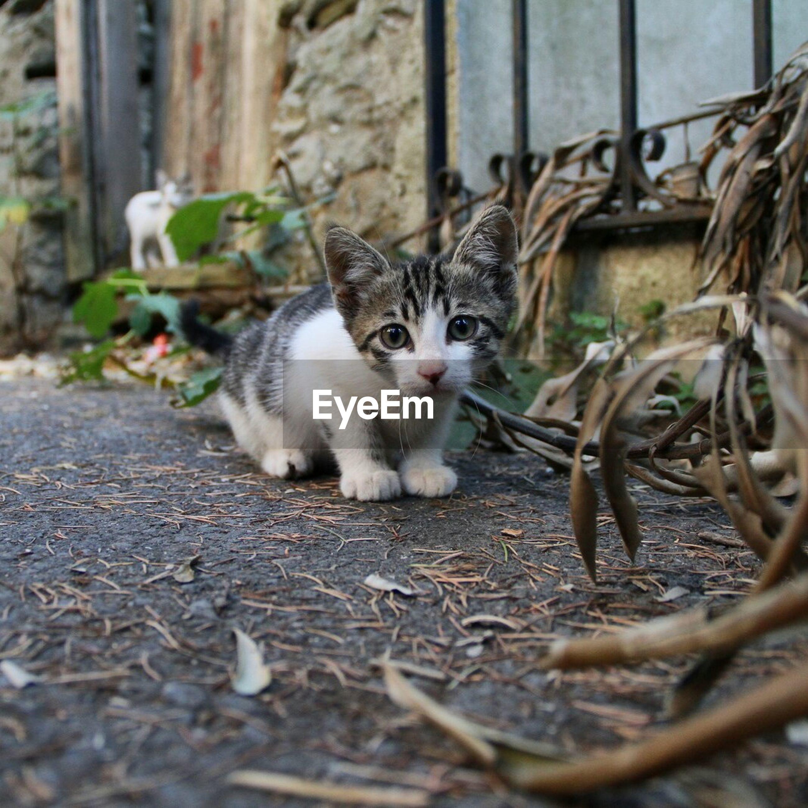 Portrait of kittens on footpath