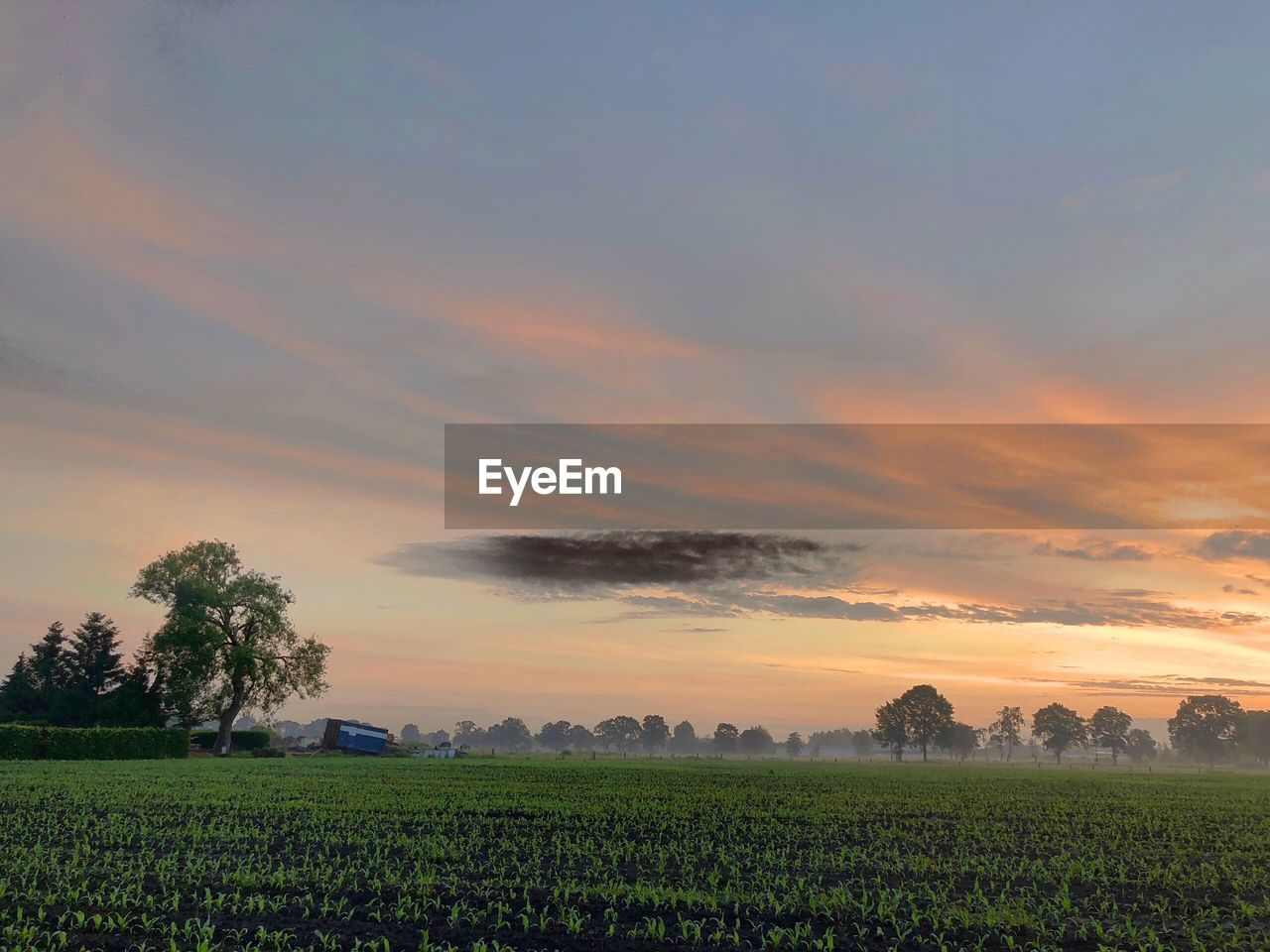 sky, beauty in nature, scenics - nature, field, landscape, sunset, agriculture, tranquil scene, plant, rural scene, tranquility, environment, growth, farm, land, cloud - sky, orange color, tree, nature, crop, no people, outdoors, plantation, gardening, planting