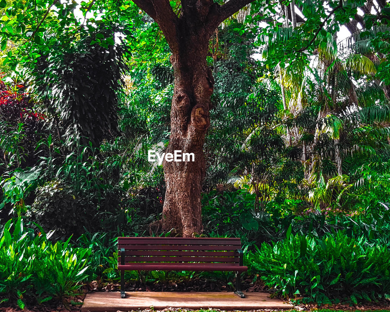 tree, growth, green color, nature, tree trunk, no people, plant, outdoors, day, branch, beauty in nature
