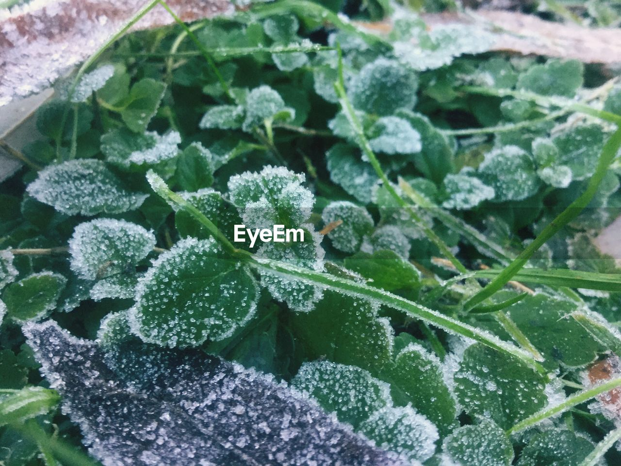 High Angle View Of Frozen Plants