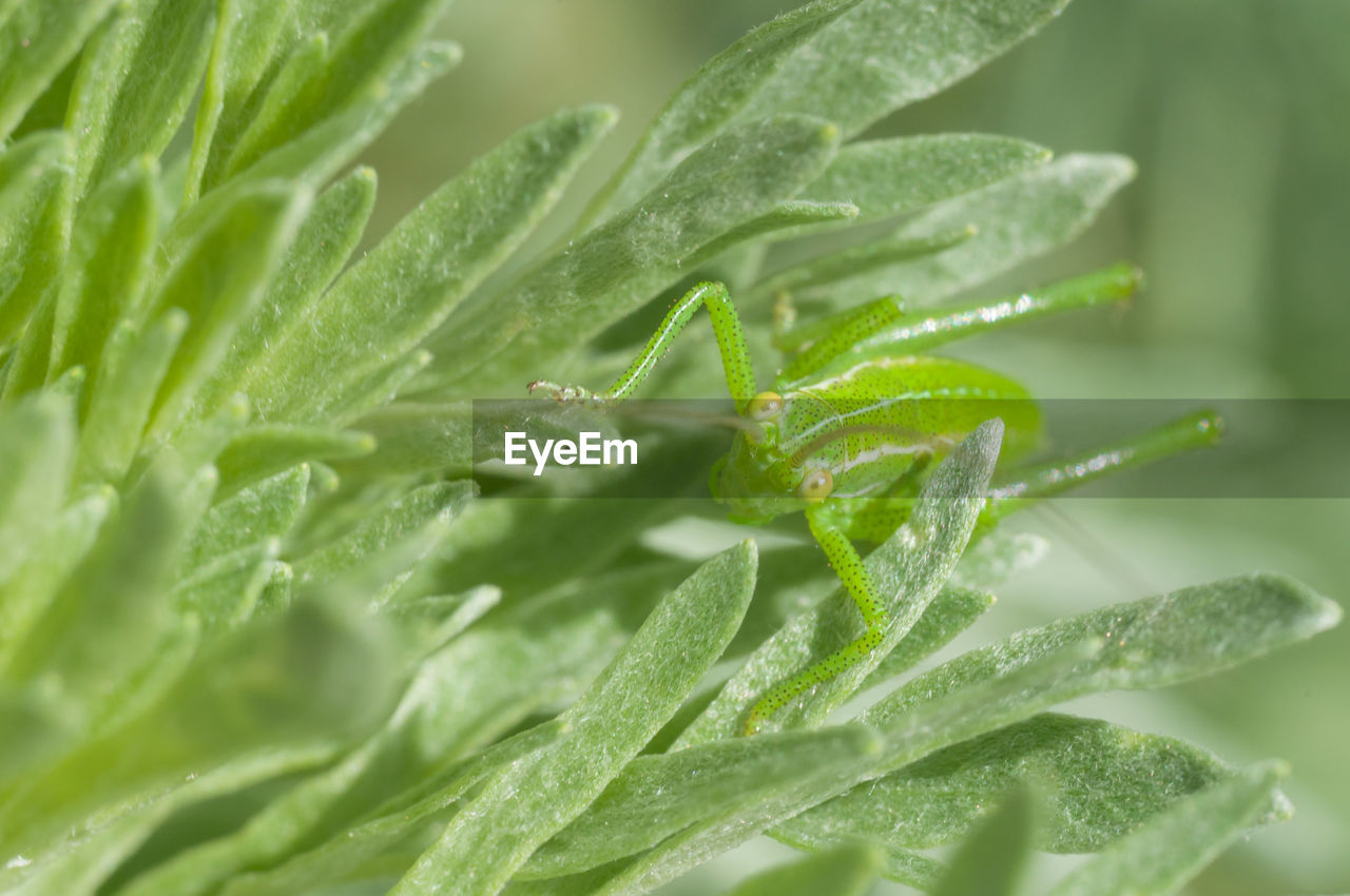 green color, leaf, plant, plant part, close-up, growth, selective focus, no people, nature, beauty in nature, freshness, drop, day, water, vegetable, full frame, backgrounds, wet, food, leaves