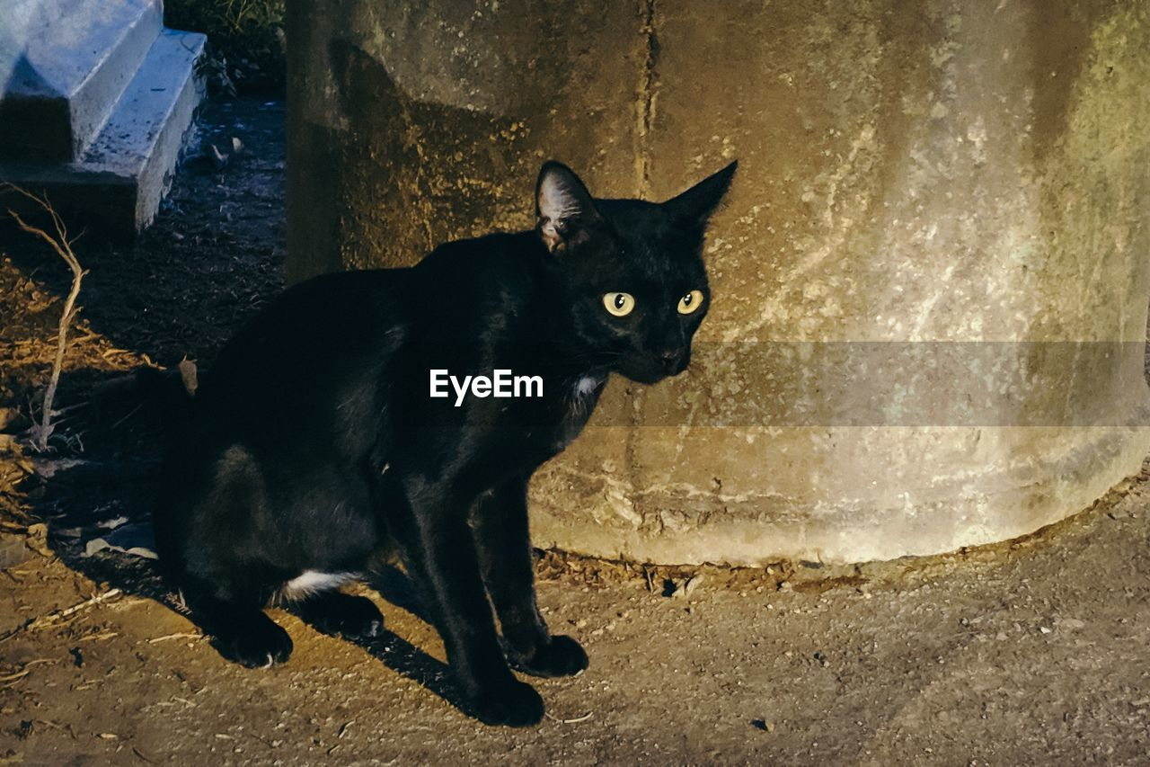 mammal, feline, one animal, cat, domestic animals, domestic, pets, domestic cat, vertebrate, black color, looking at camera, no people, portrait, sitting, wall - building feature, day, relaxation, whisker, animal eye