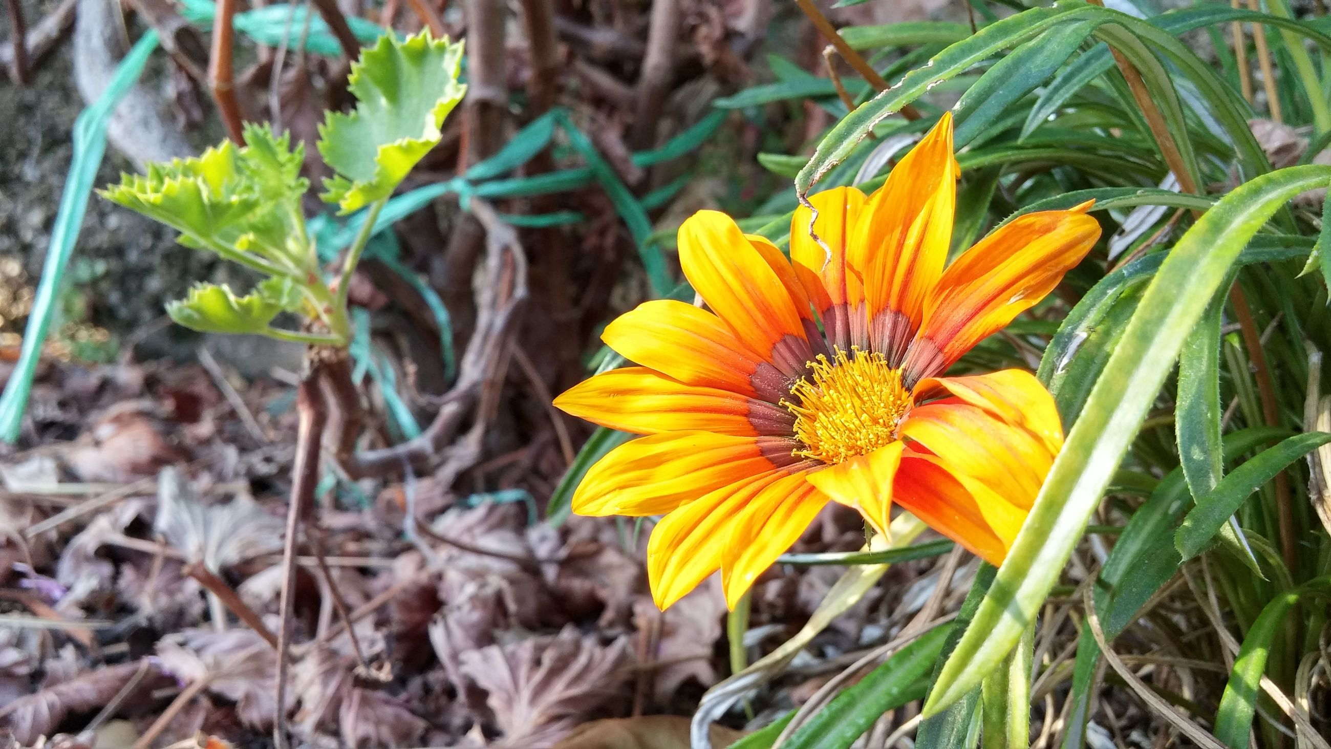 flower, petal, fragility, flower head, freshness, yellow, growth, close-up, plant, beauty in nature, insect, pollen, blooming, nature, focus on foreground, single flower, leaf, orange color, one animal, high angle view