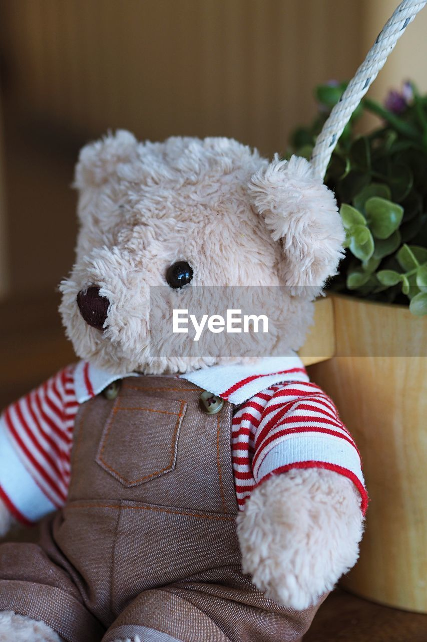 CLOSE-UP OF TEDDY BEAR SITTING ON SOFA AT HOME
