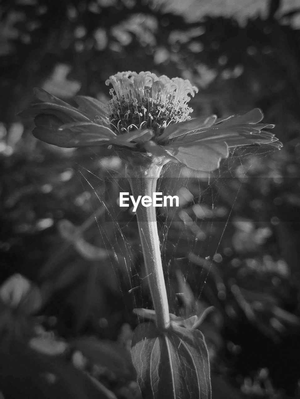 flower, flowering plant, fragility, plant, vulnerability, growth, freshness, beauty in nature, close-up, focus on foreground, nature, inflorescence, flower head, no people, petal, day, plant stem, outdoors, wildflower, pollen, sepal, dandelion seed