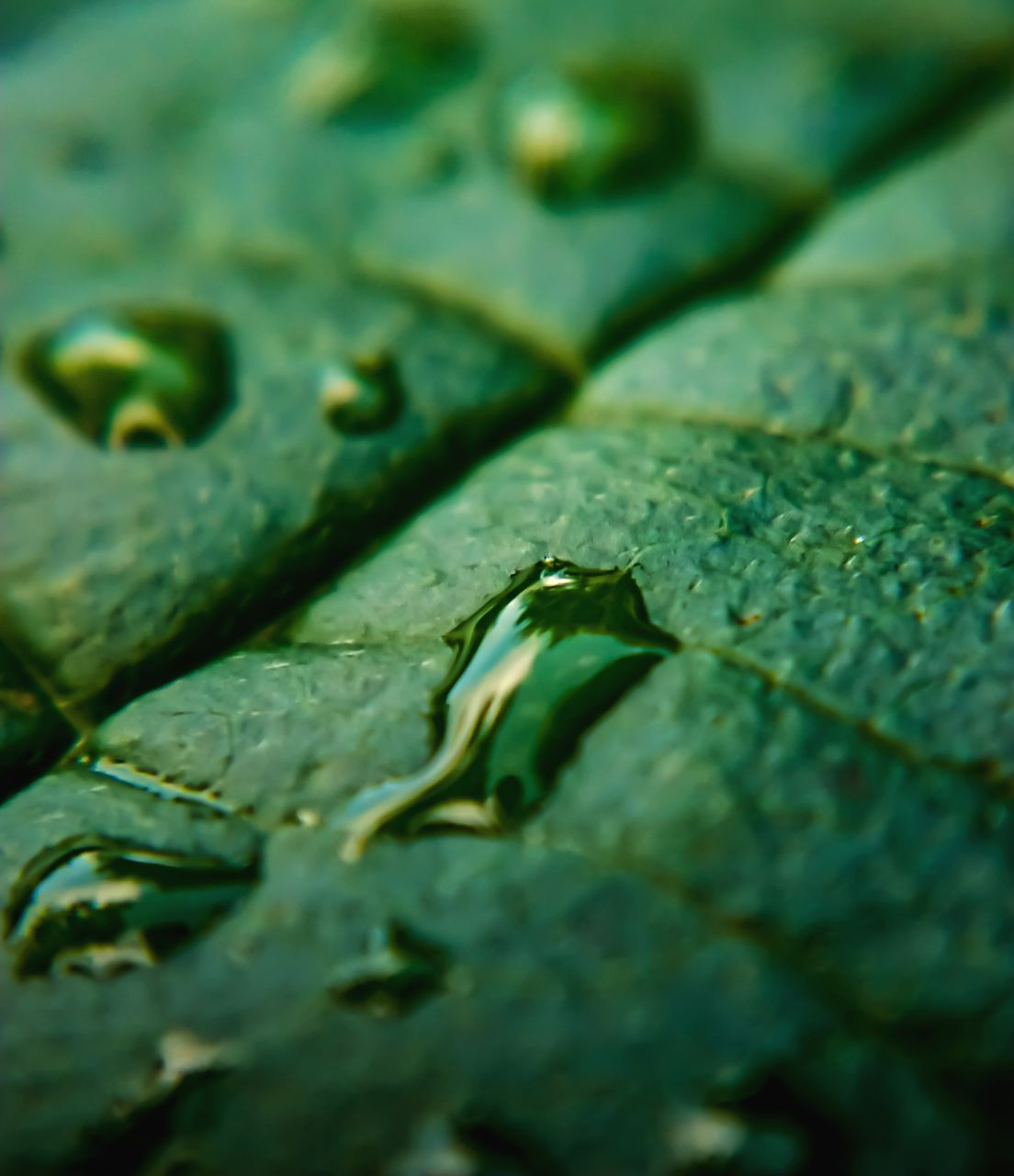 selective focus, close-up, green color, full frame, no people, leaf, backgrounds, textured, day, outdoors, nature, water, animal themes