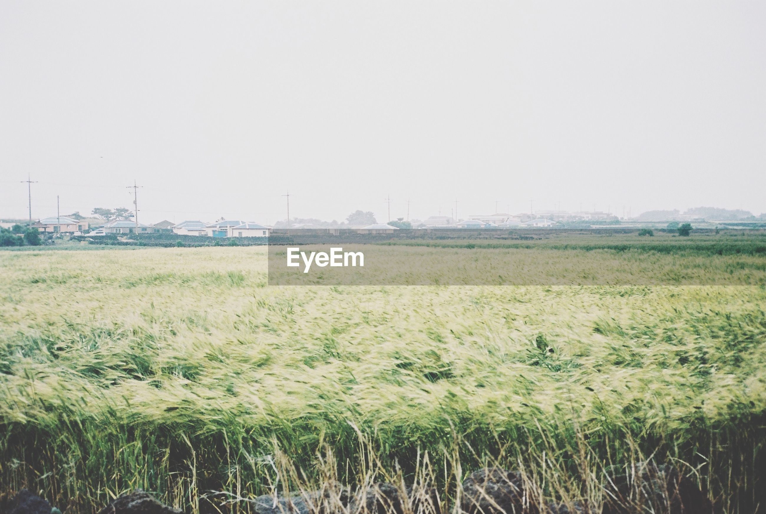 clear sky, copy space, field, landscape, grass, growth, rural scene, tranquility, tranquil scene, nature, plant, agriculture, beauty in nature, green color, farm, day, scenics, outdoors, no people, crop