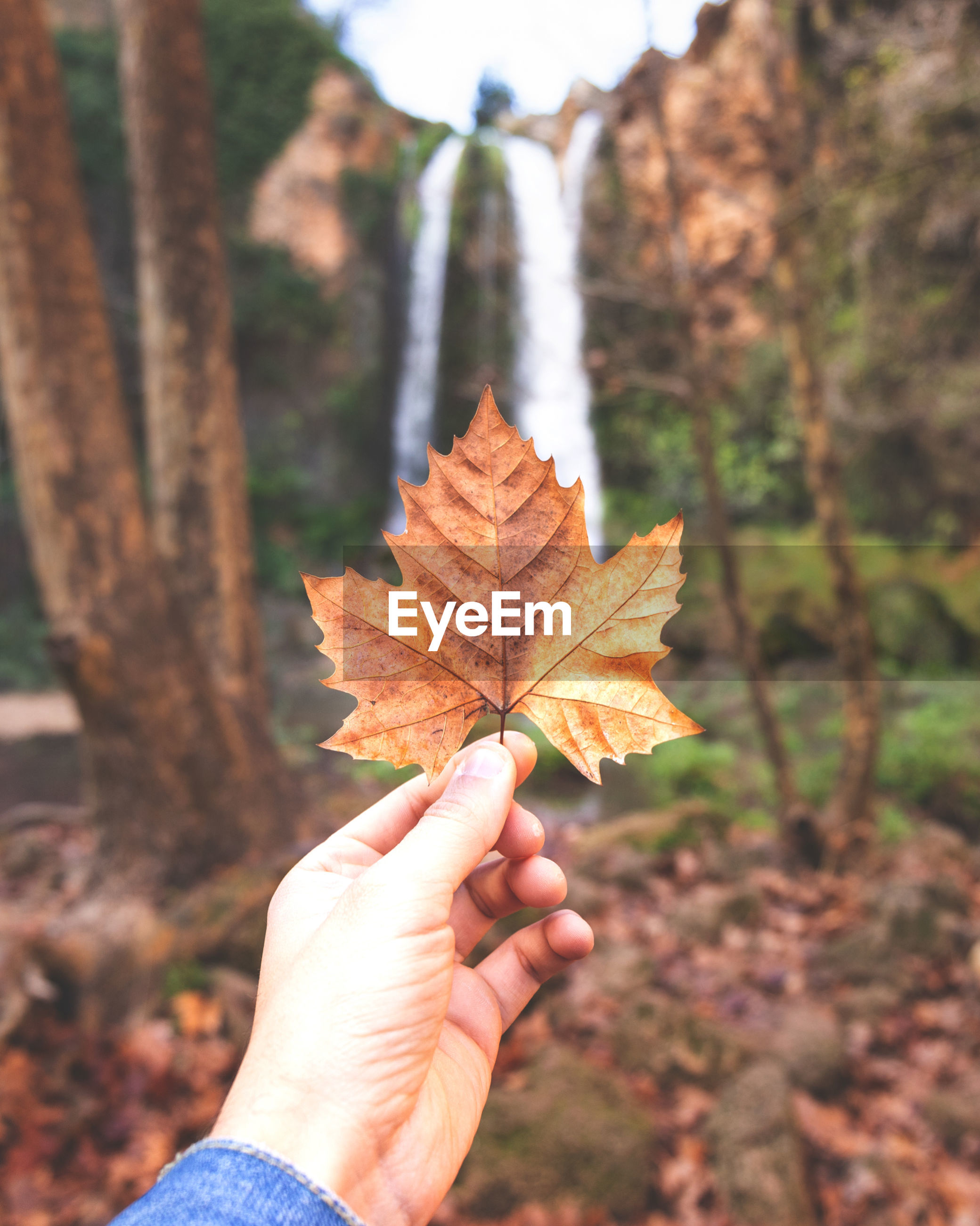 Close-up of hand holding maple leaf against waterfall