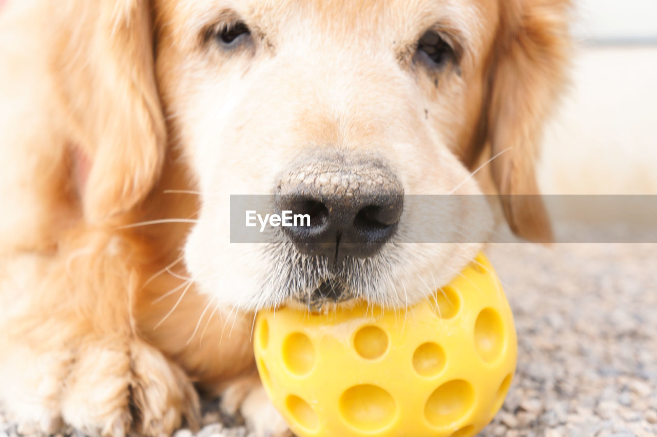 dog, one animal, pets, domestic animals, looking at camera, animal themes, close-up, portrait, mammal, no people, day, indoors