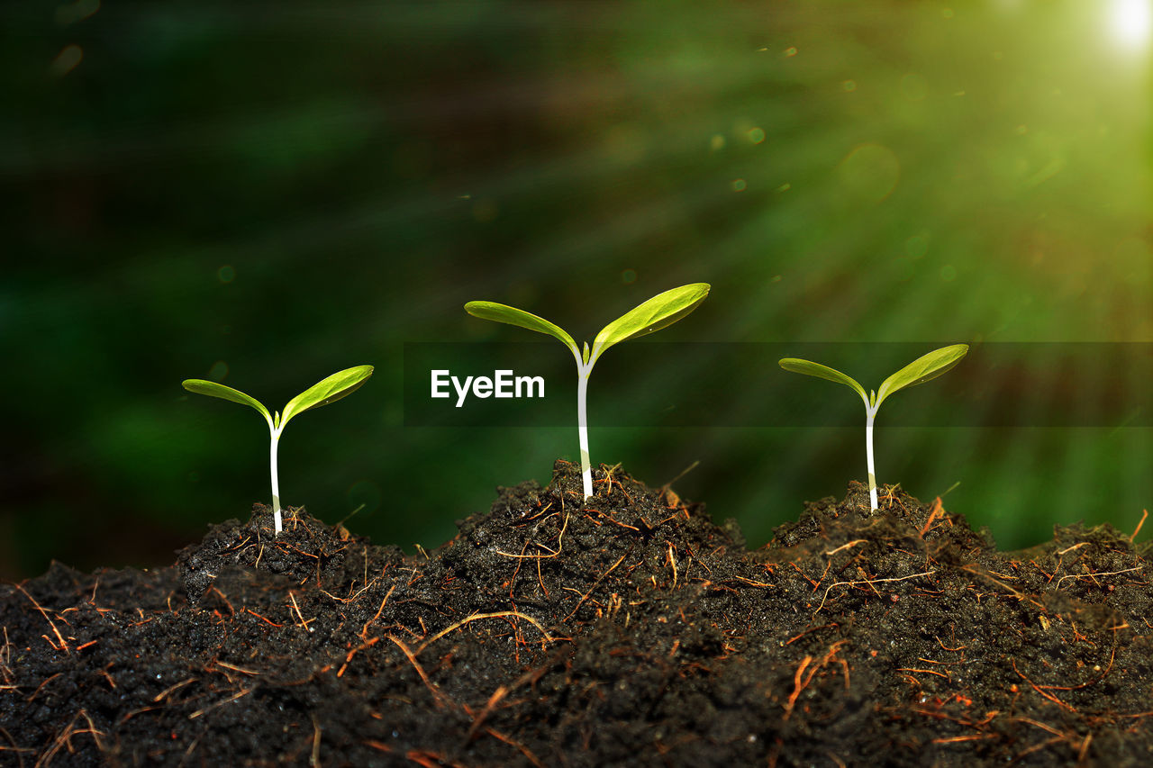 growth, plant, nature, land, plant part, beginnings, leaf, no people, beauty in nature, field, vulnerability, seedling, close-up, green color, day, fragility, new life, outdoors, selective focus, dirt, plantation, gardening