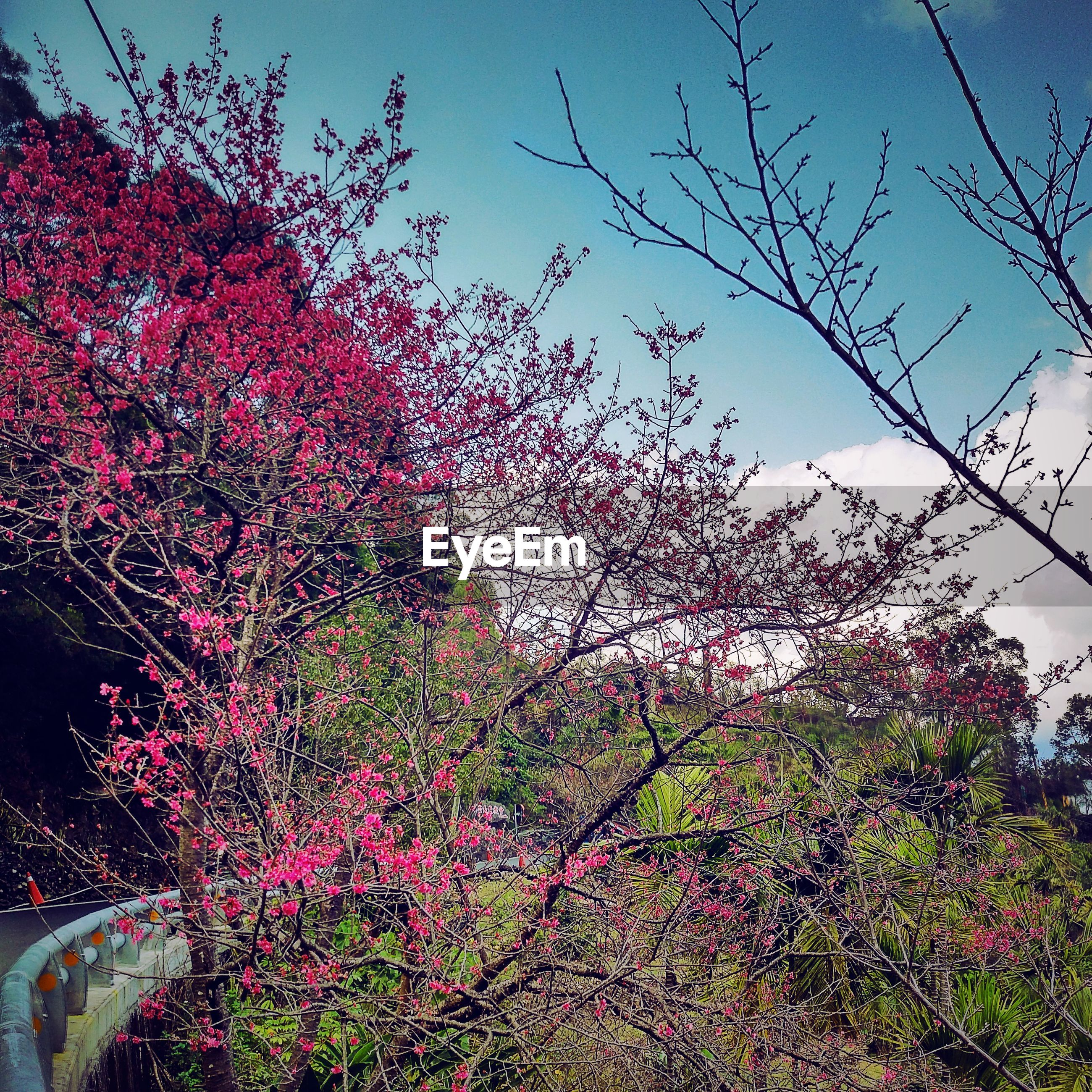 flower, tree, growth, branch, low angle view, freshness, nature, beauty in nature, clear sky, building exterior, pink color, built structure, blossom, sky, fragility, architecture, blooming, cherry tree, in bloom, red