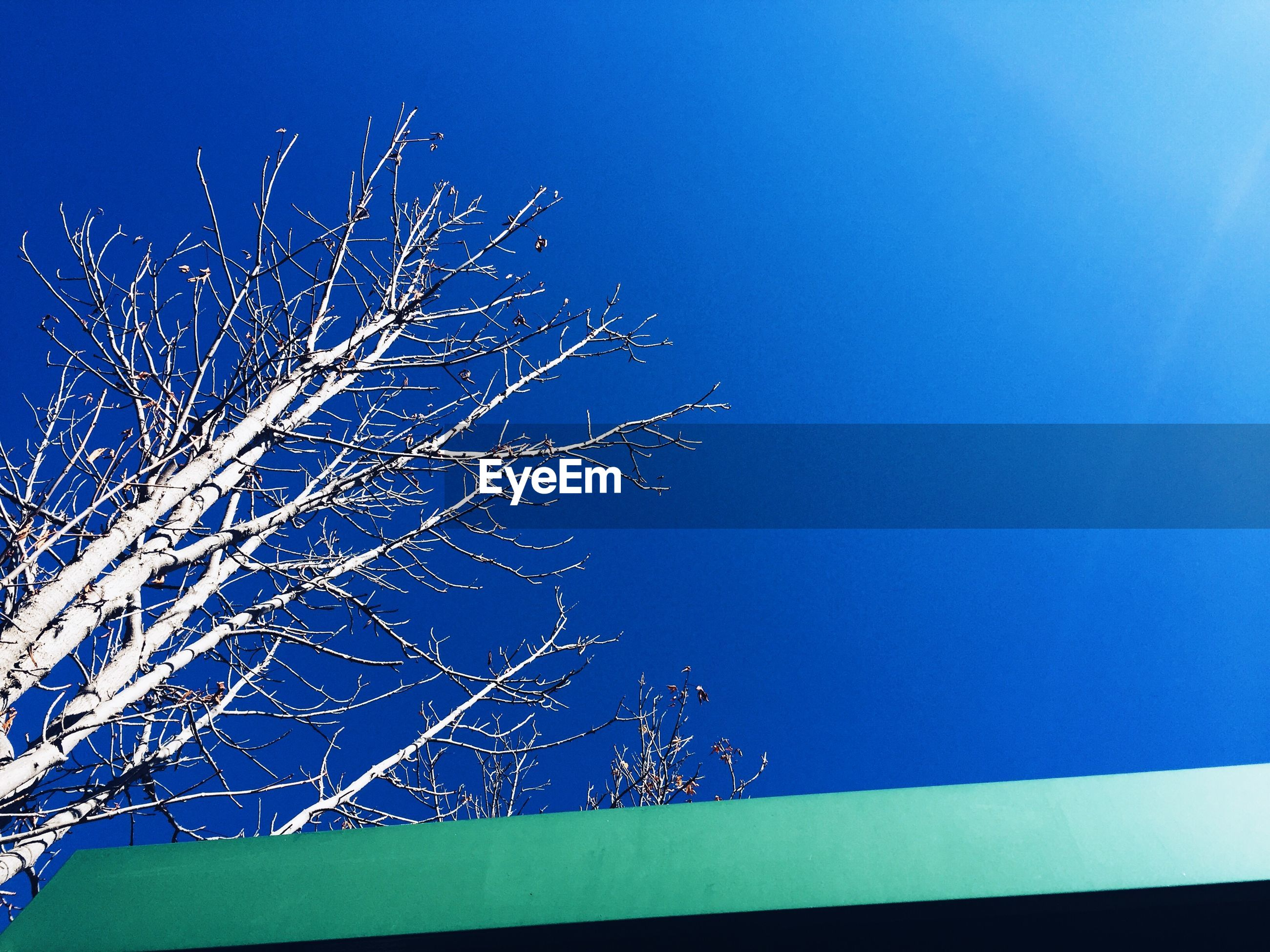 clear sky, low angle view, blue, copy space, night, illuminated, branch, bare tree, tree, nature, outdoors, beauty in nature, sky, no people, built structure, moon, high section, tranquility, growth, dusk