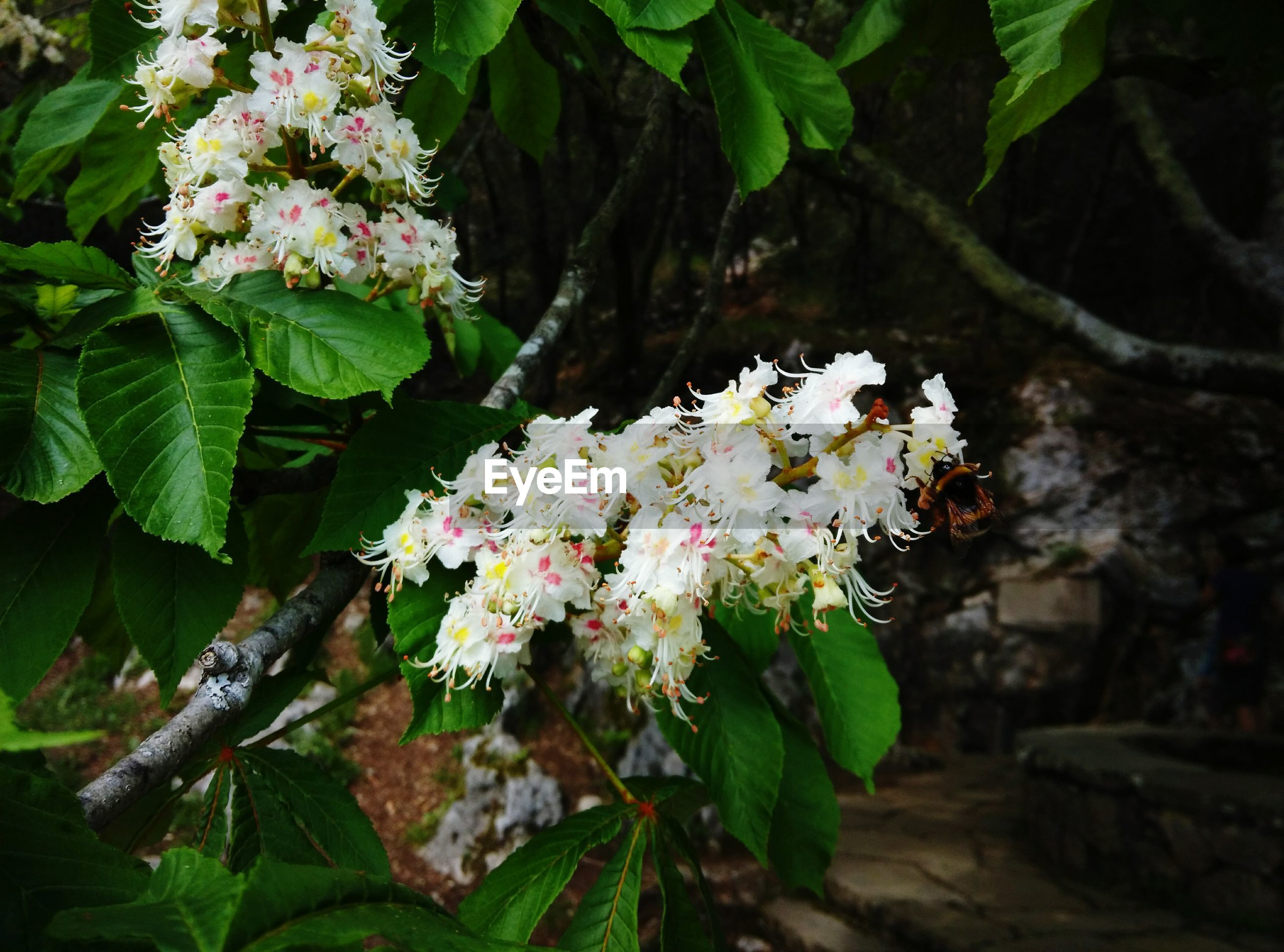 flower, freshness, petal, growth, fragility, beauty in nature, leaf, flower head, blooming, plant, nature, in bloom, blossom, white color, close-up, green color, focus on foreground, high angle view, outdoors, park - man made space